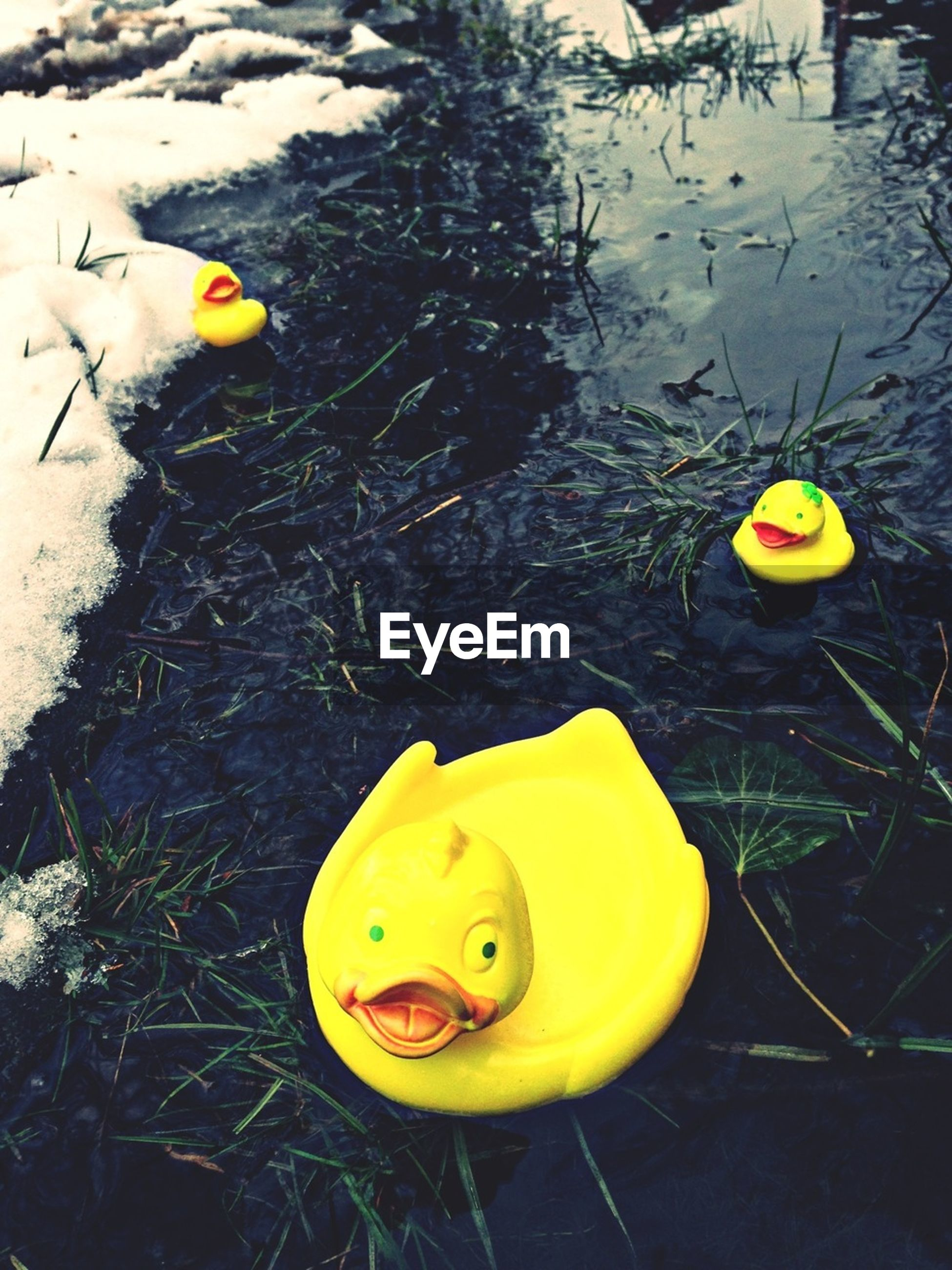 yellow, high angle view, water, transportation, day, toy, floating on water, outdoors, no people, lake, duck, reflection, nature, animal representation, animal themes, mode of transport, close-up, childhood, wet, street