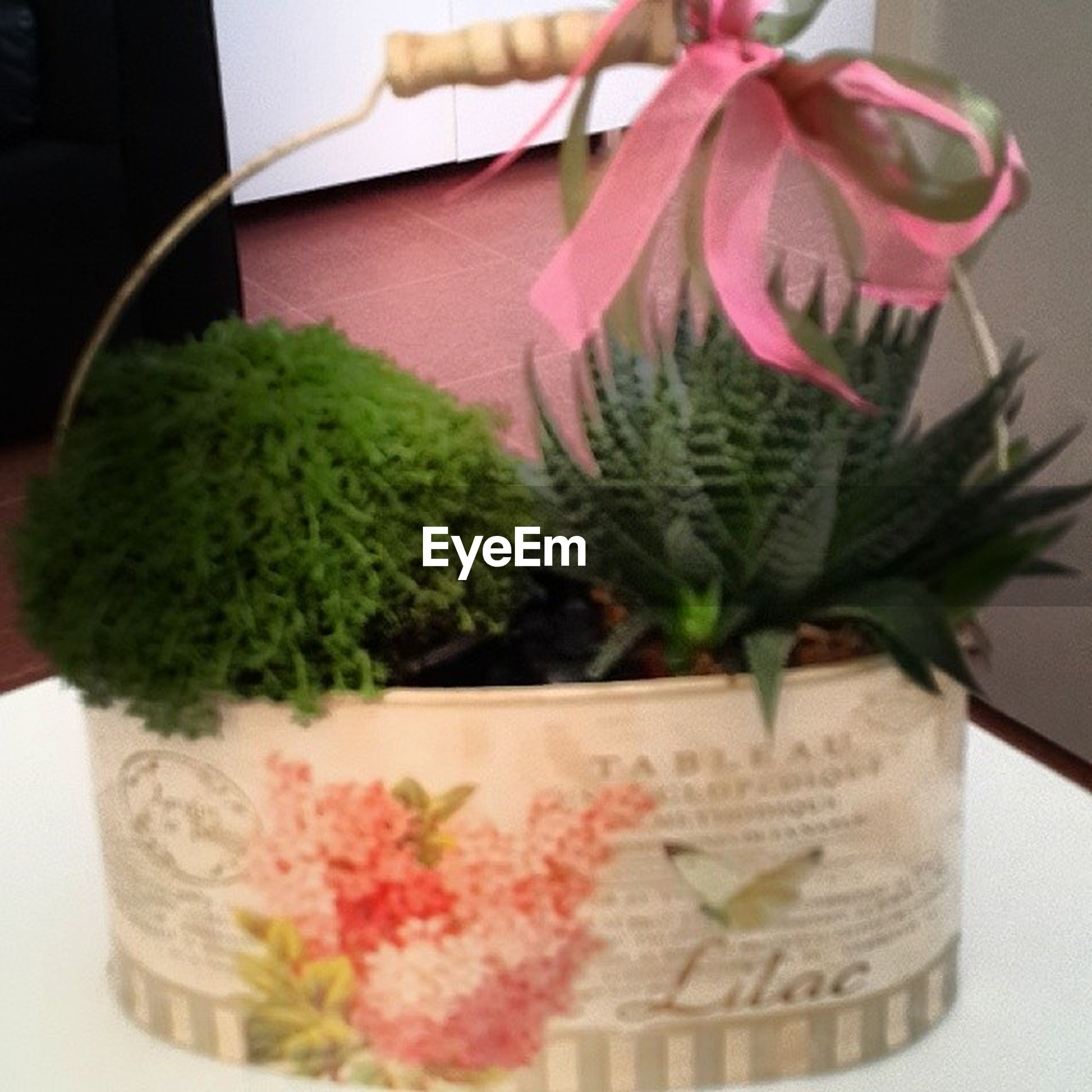 flower, freshness, indoors, close-up, potted plant, table, plant, vase, growth, still life, fragility, leaf, pink color, focus on foreground, decoration, no people, nature, flower pot, green color, home interior
