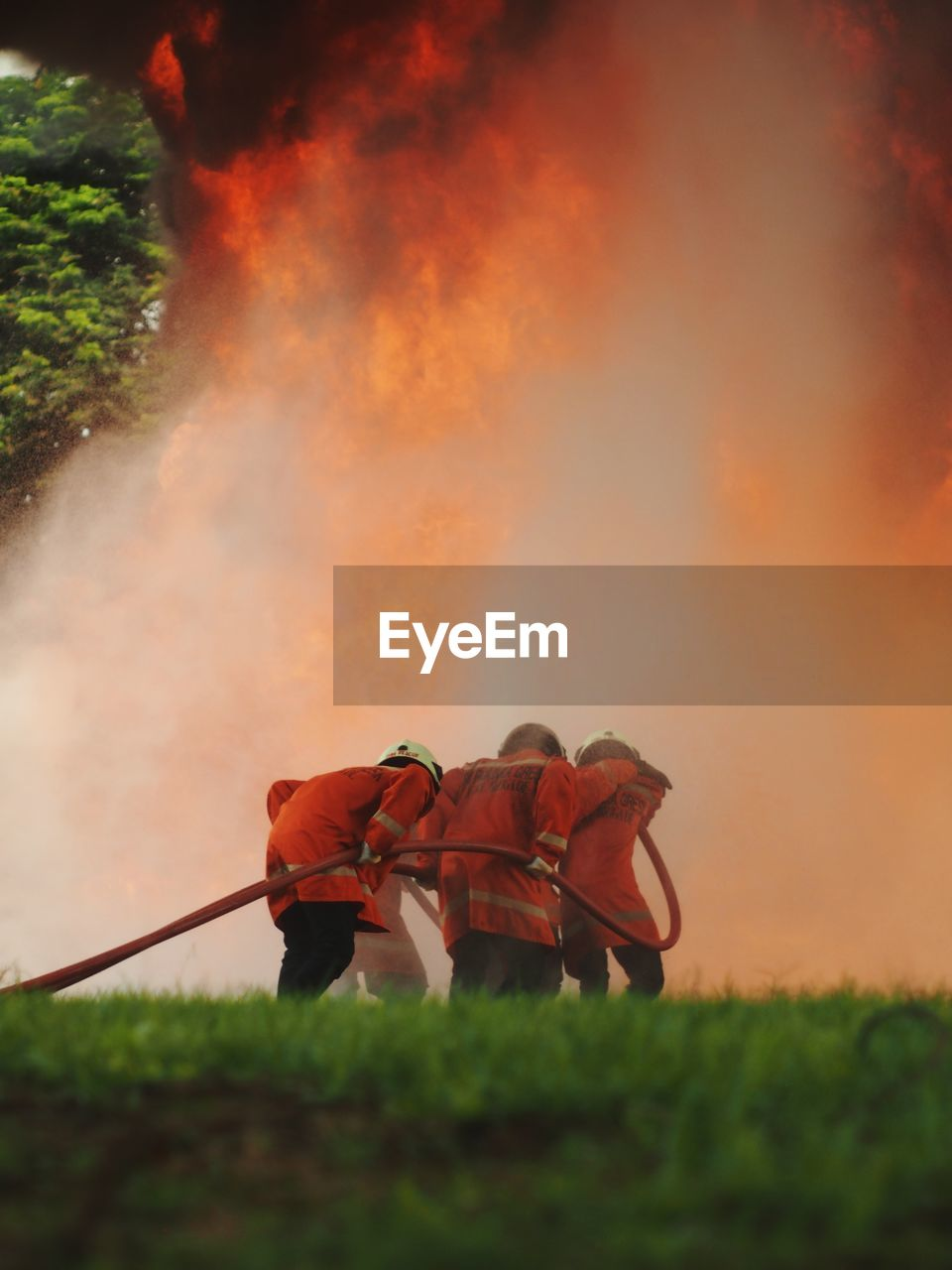 real people, men, nature, rear view, group of people, plant, occupation, people, smoke - physical structure, orange color, land, outdoors, fire, firefighter, sky, grass, field, burning, fire - natural phenomenon, uniform