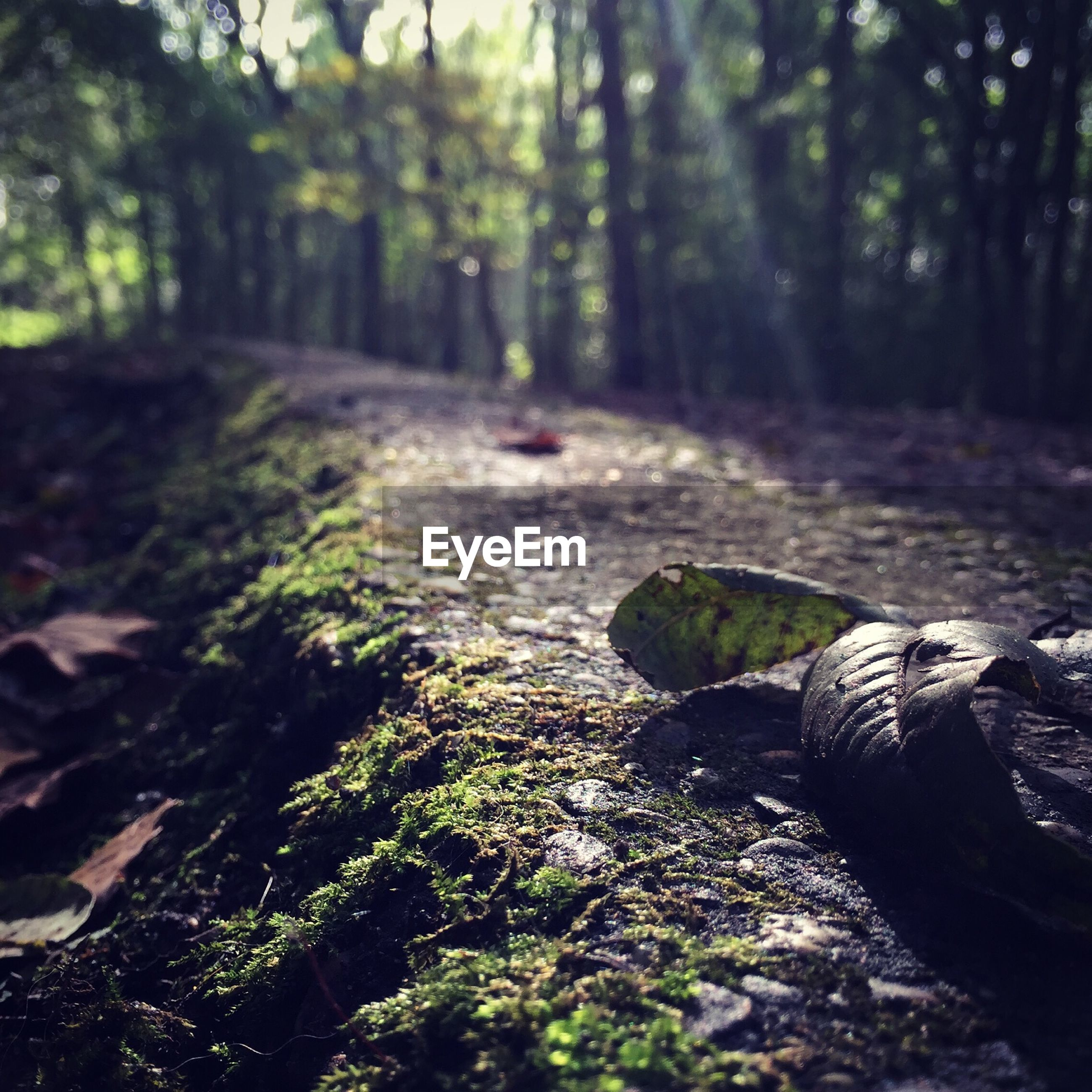 tree, forest, tree trunk, tranquility, nature, wood - material, the way forward, tranquil scene, growth, leaf, outdoors, day, moss, selective focus, beauty in nature, woodland, log, no people, surface level, non-urban scene