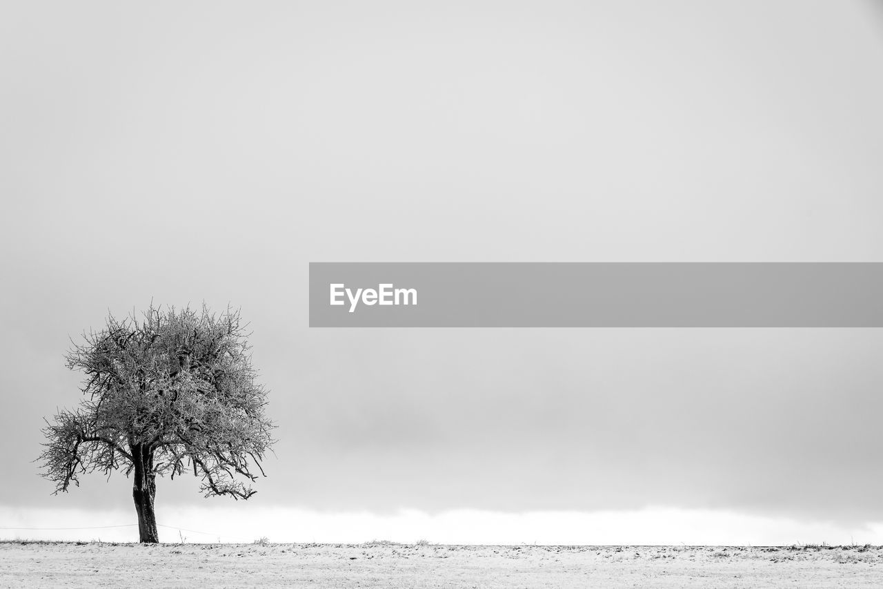 Tree On Field Against Cloudy Sky