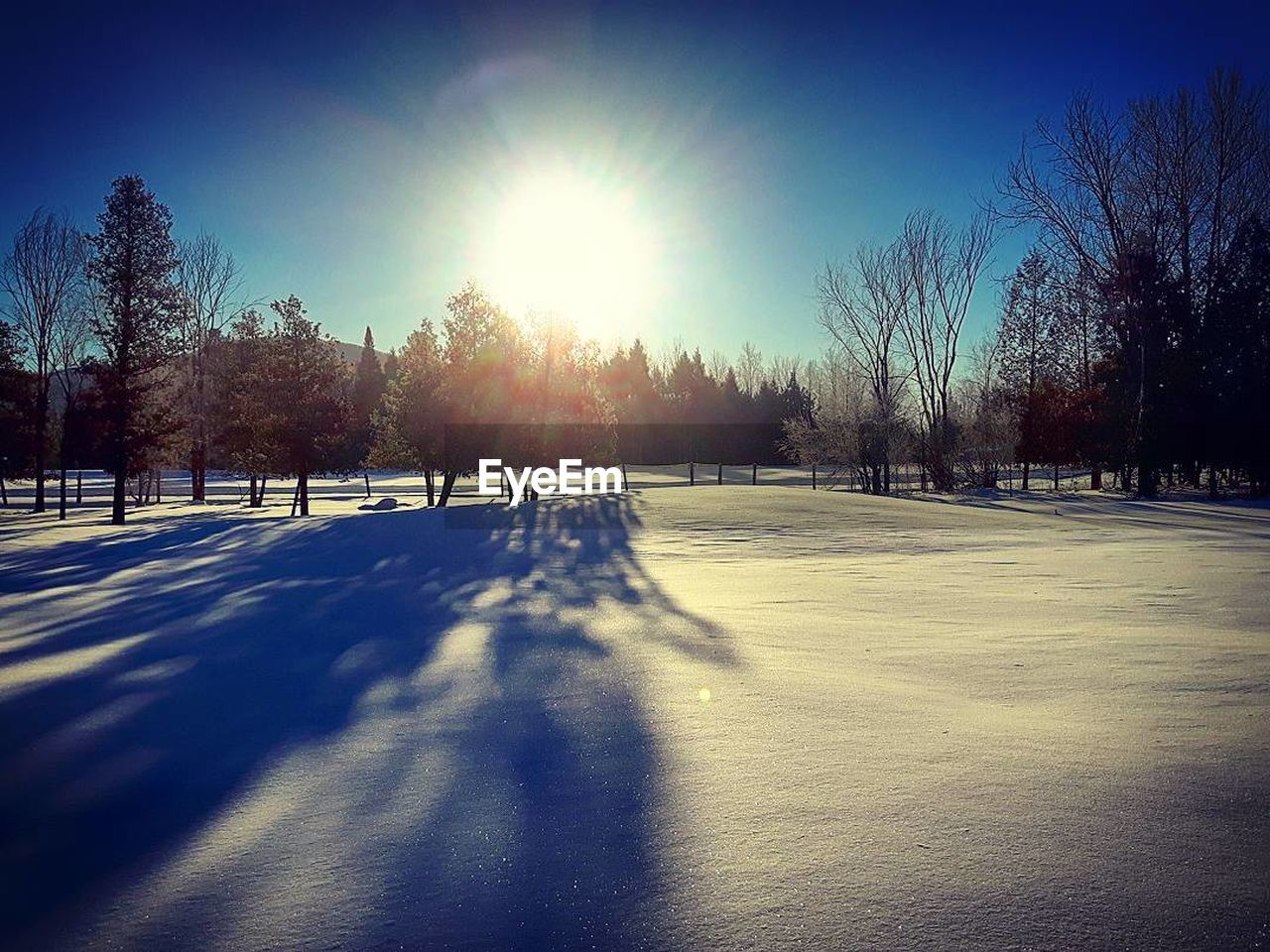 sunlight, winter, cold temperature, snow, tree, nature, shadow, tranquility, landscape, tranquil scene, beauty in nature, day, sun, clear sky, sky, outdoors, bare tree, no people, scenics