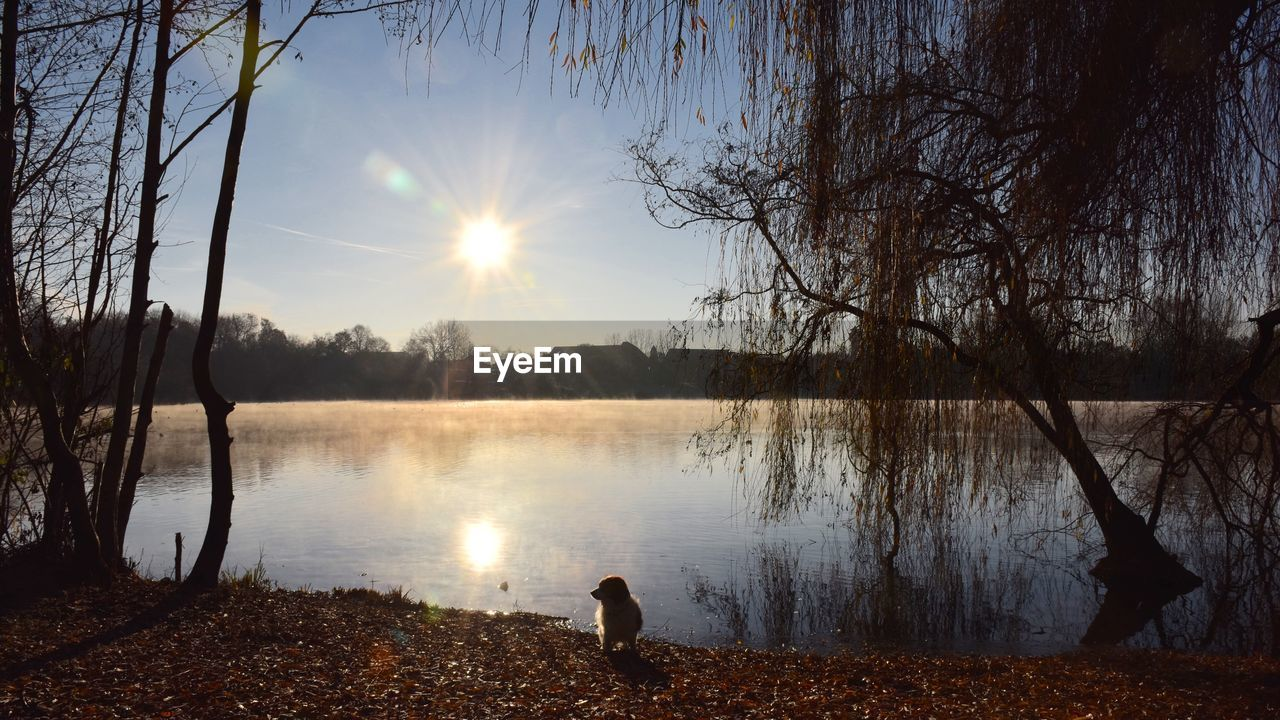 water, lake, sunset, sun, nature, tree, reflection, beauty in nature, animal themes, bird, silhouette, one animal, sunlight, scenics, lakeshore, tranquil scene, outdoors, tranquility, animals in the wild, sky, one person, bare tree, branch, real people, day, swan, mammal