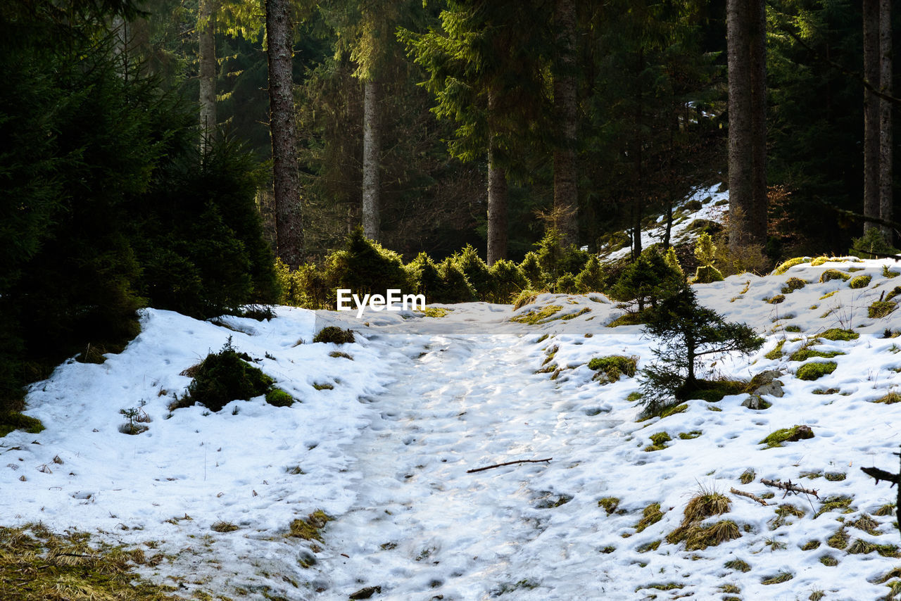 snow, plant, tree, winter, forest, beauty in nature, cold temperature, no people, land, nature, day, covering, scenics - nature, white color, tranquility, non-urban scene, outdoors, growth, tranquil scene, flowing water, flowing