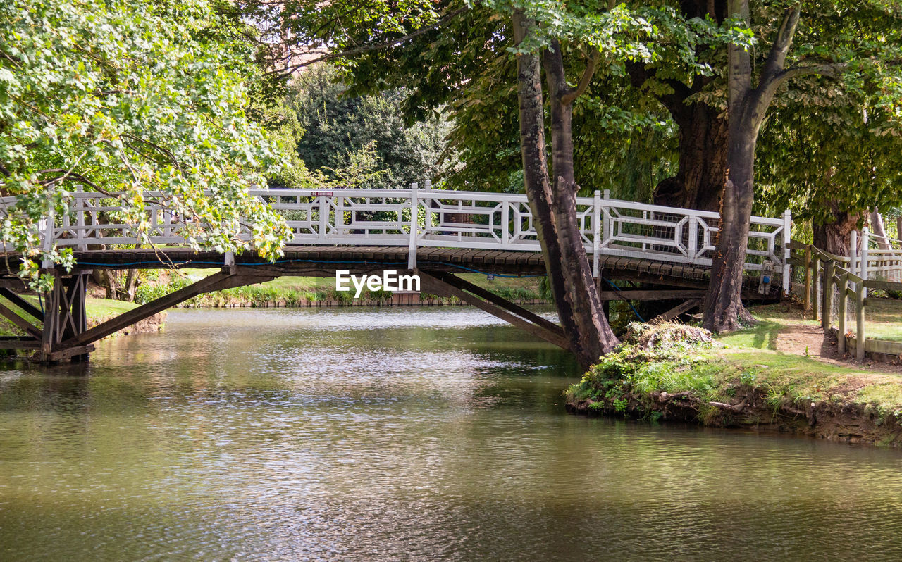tree, bridge, plant, connection, bridge - man made structure, water, architecture, built structure, nature, reflection, no people, river, day, tranquility, outdoors, footbridge, tranquil scene, forest, beauty in nature