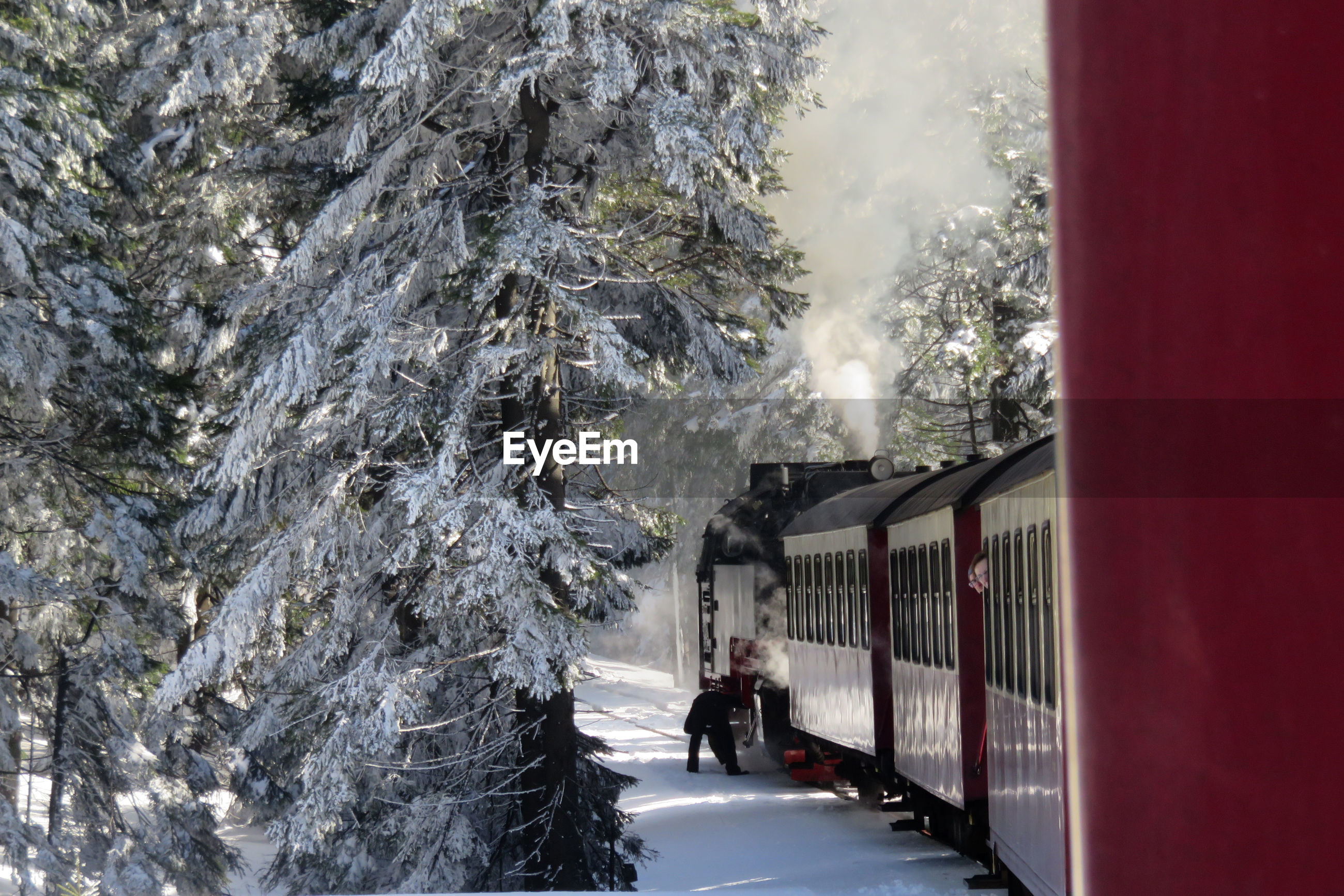 Snow covered train amidst trees during winter