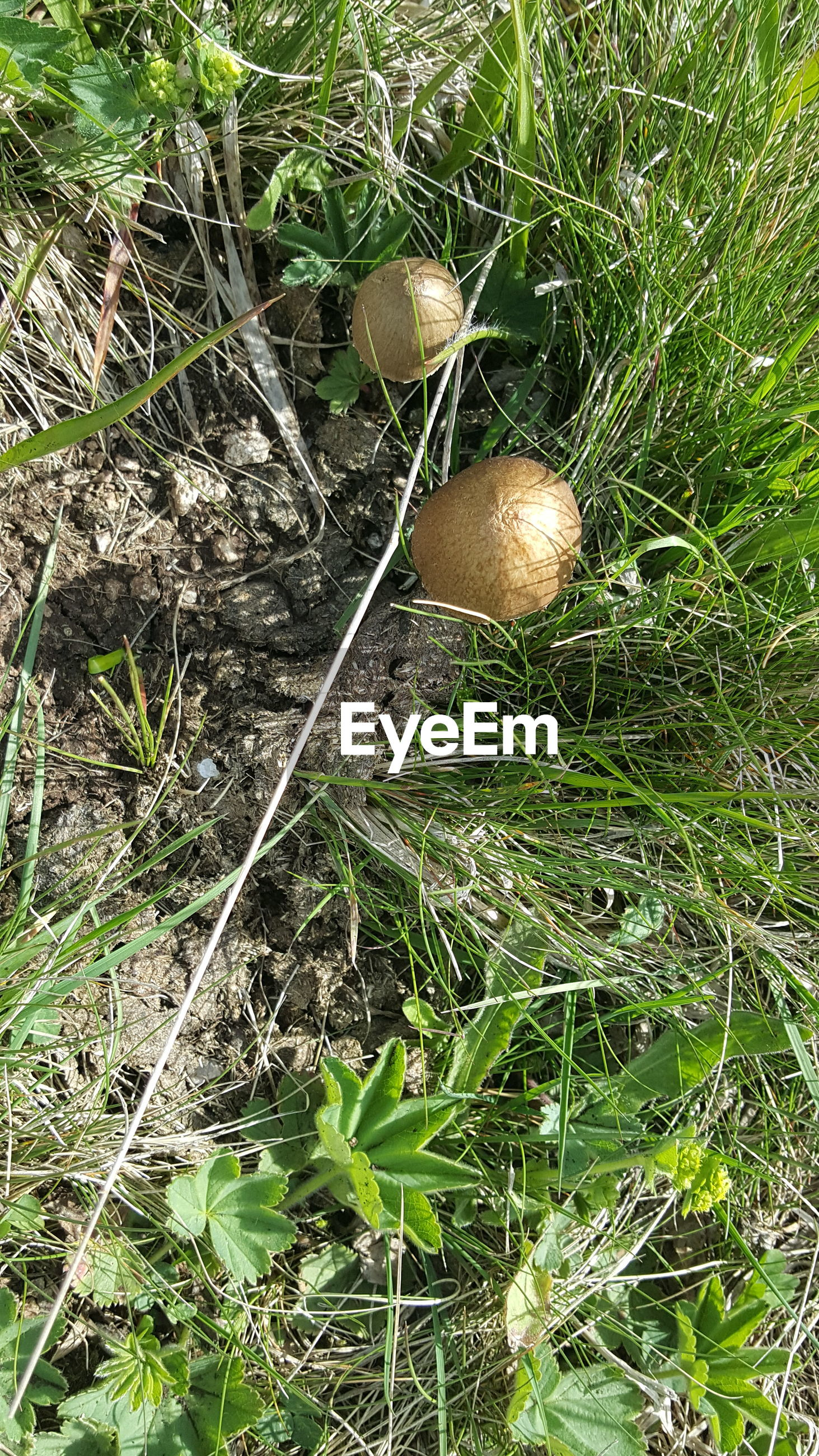 Close-up of mushrooms growing in field
