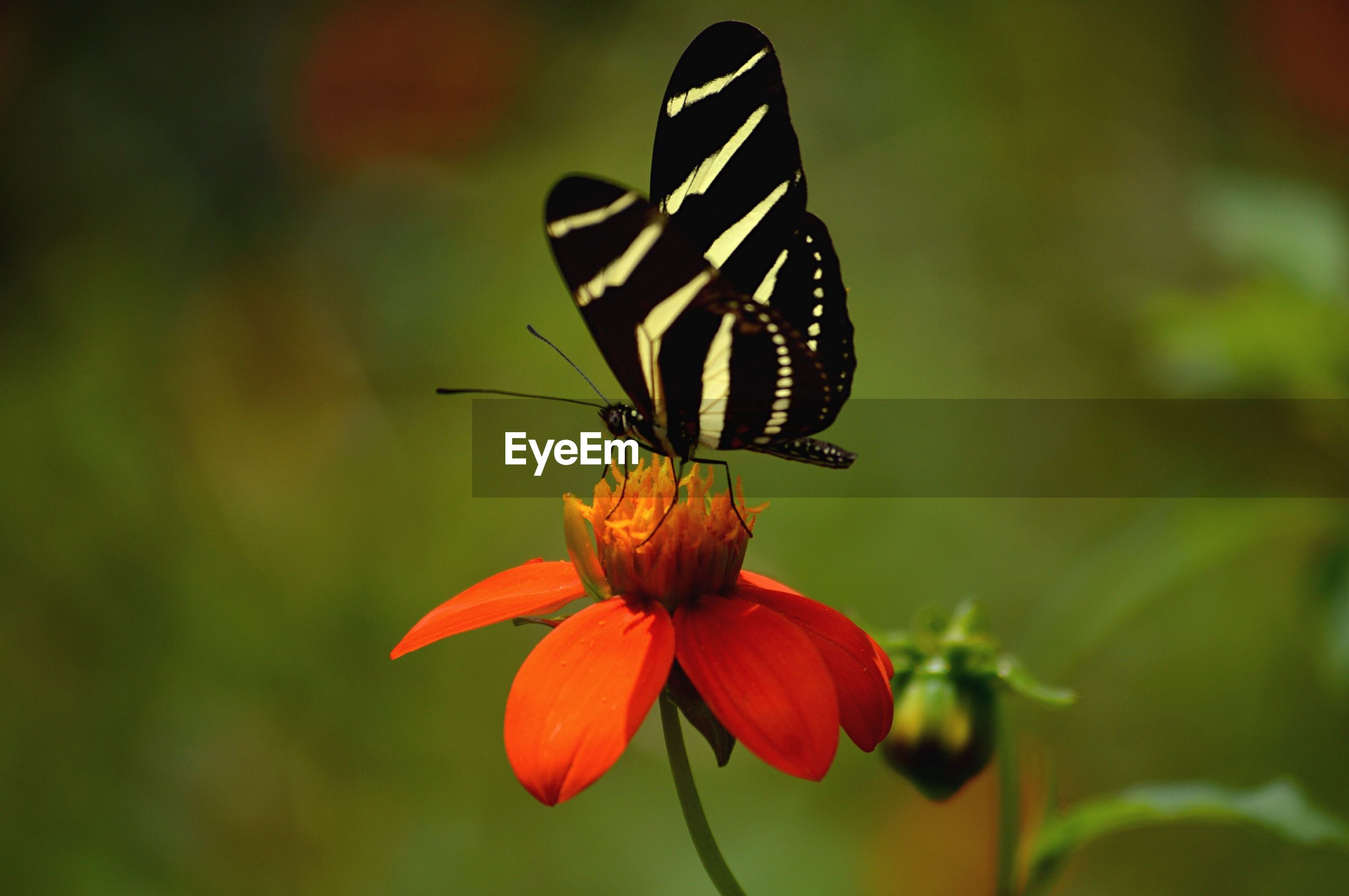 Side view of butterfly on flower against blurred background