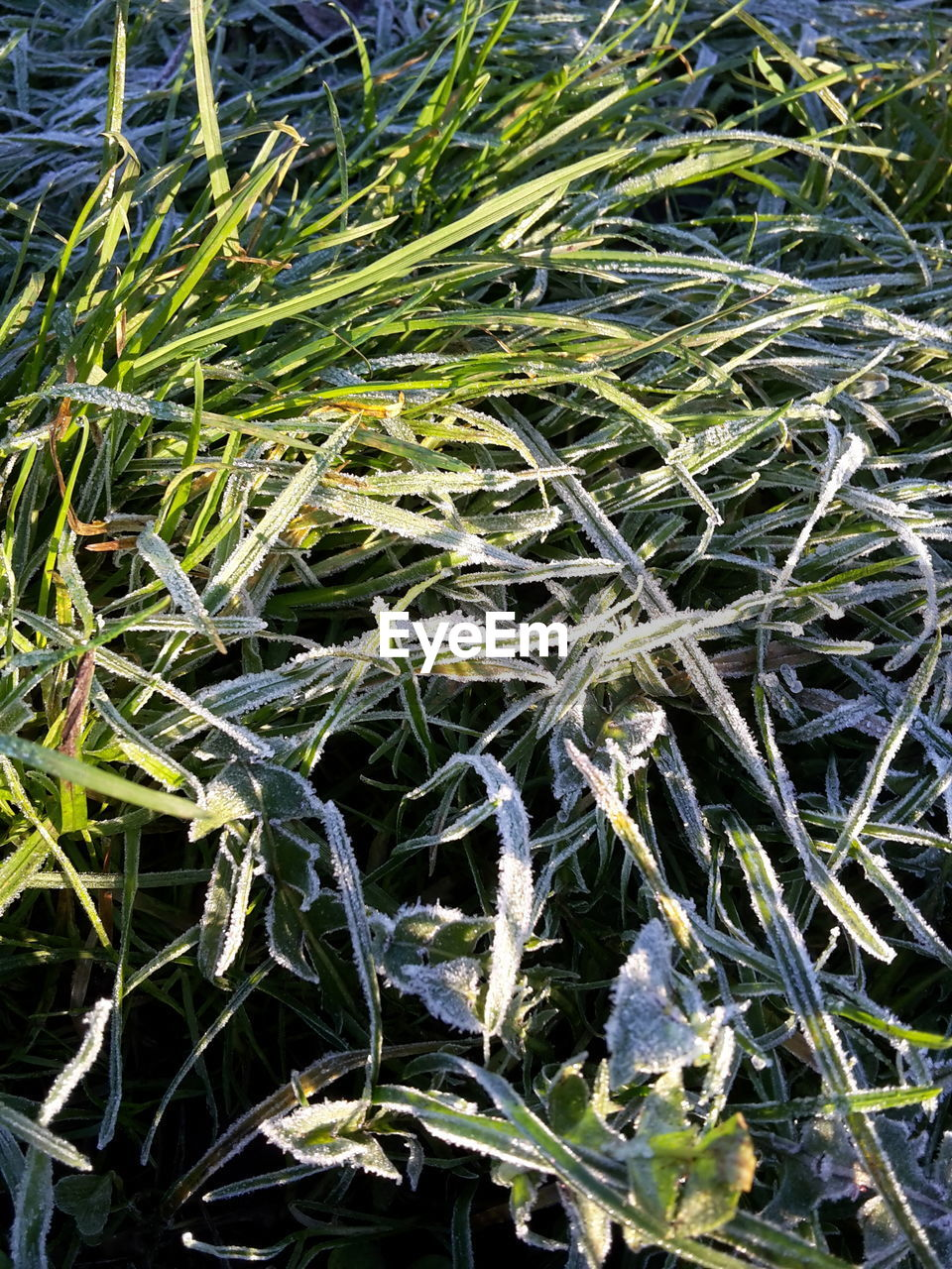High angle view of frozen grass on field