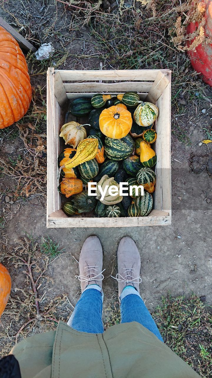 low section, human leg, food, food and drink, vegetable, high angle view, healthy eating, shoe, one person, personal perspective, pumpkin, real people, wellbeing, day, freshness, men, lifestyles, human body part, standing, body part, outdoors, human foot