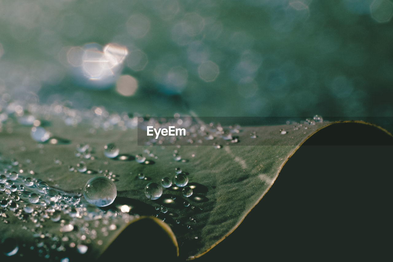 water, drop, leaf, nature, beauty in nature, purity, fragility, wet, close-up, no people, freshness, raindrop, day, outdoors