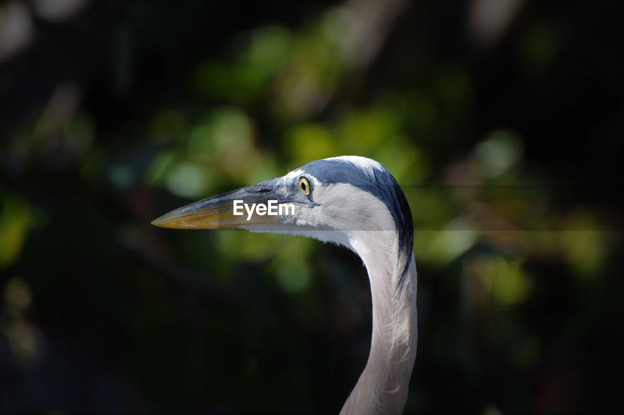 animal themes, bird, animals in the wild, focus on foreground, one animal, heron, animal wildlife, beak, day, nature, close-up, outdoors, no people, beauty in nature, crane - bird