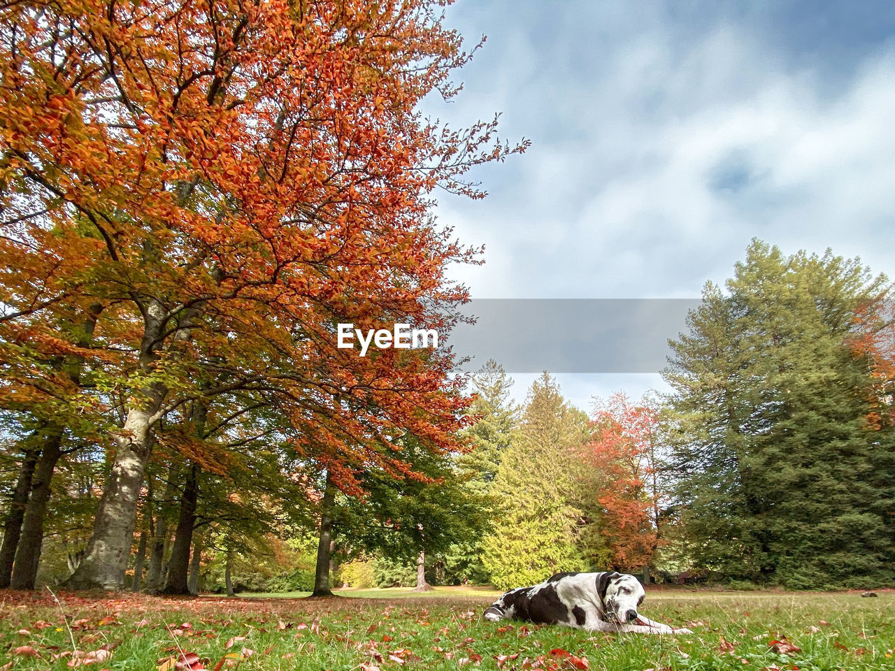 mammal, animal themes, one animal, animal, tree, domestic, pets, domestic animals, plant, vertebrate, autumn, canine, dog, nature, change, day, no people, sky, growth, cloud - sky