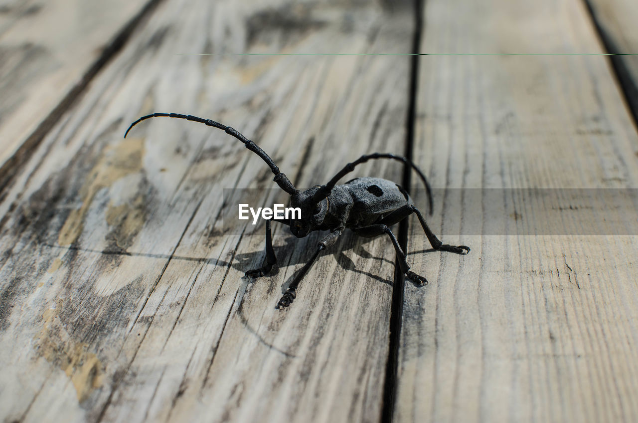 insect, invertebrate, one animal, animals in the wild, animal, animal themes, animal wildlife, wood - material, close-up, no people, selective focus, table, arthropod, high angle view, day, zoology, black color, animal body part, outdoors, arachnid