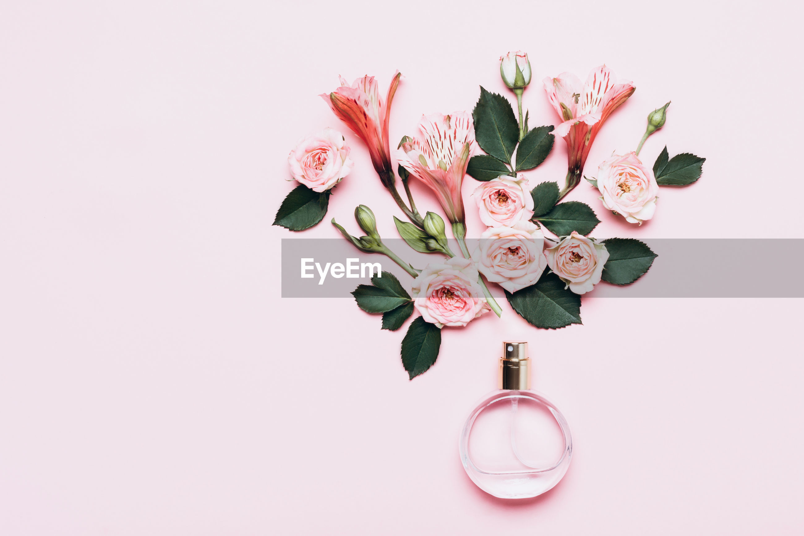 CLOSE-UP OF PINK FLOWERS IN VASE AGAINST WHITE BACKGROUND
