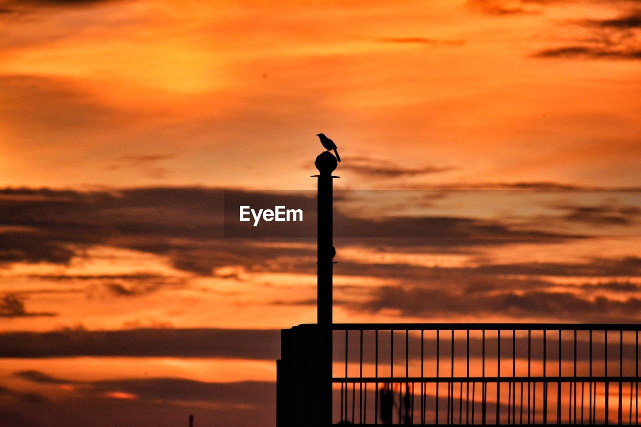 sky, sunset, cloud - sky, silhouette, orange color, bird, vertebrate, beauty in nature, animal, animal wildlife, one animal, animal themes, nature, no people, animals in the wild, perching, scenics - nature, outdoors, post, tranquil scene, wooden post