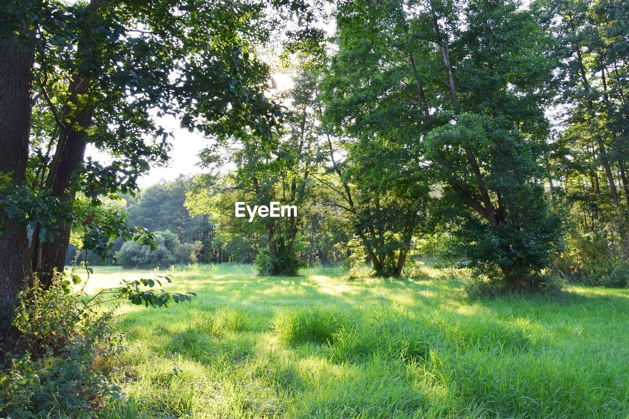 plant, tree, grass, green color, land, nature, tranquility, beauty in nature, growth, tranquil scene, day, forest, no people, landscape, scenics - nature, field, environment, non-urban scene, outdoors, sunlight