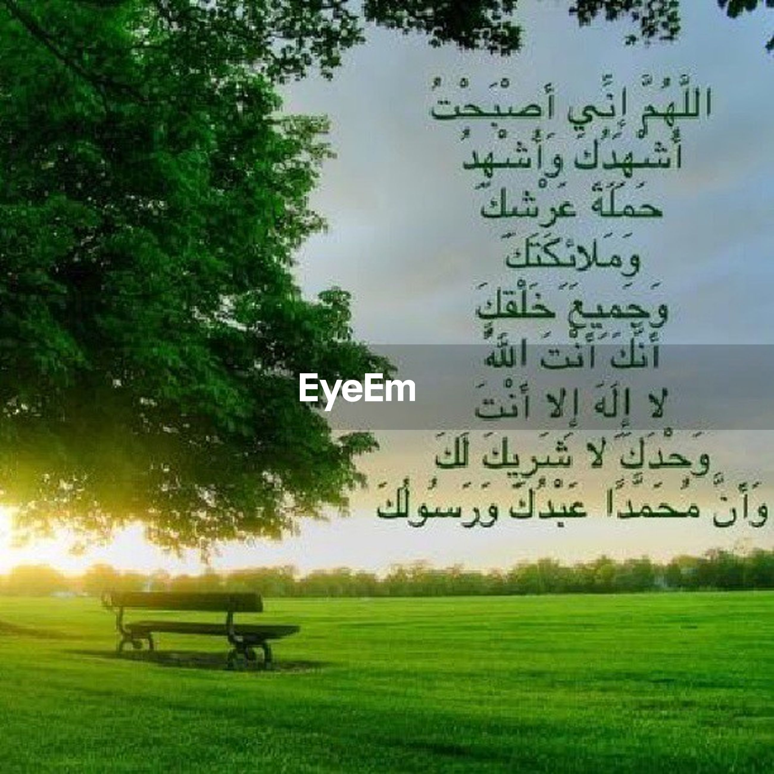 grass, field, tree, grassy, green color, landscape, sky, tranquility, nature, text, tranquil scene, growth, scenics, beauty in nature, bicycle, western script, outdoors, bench, animal themes, communication