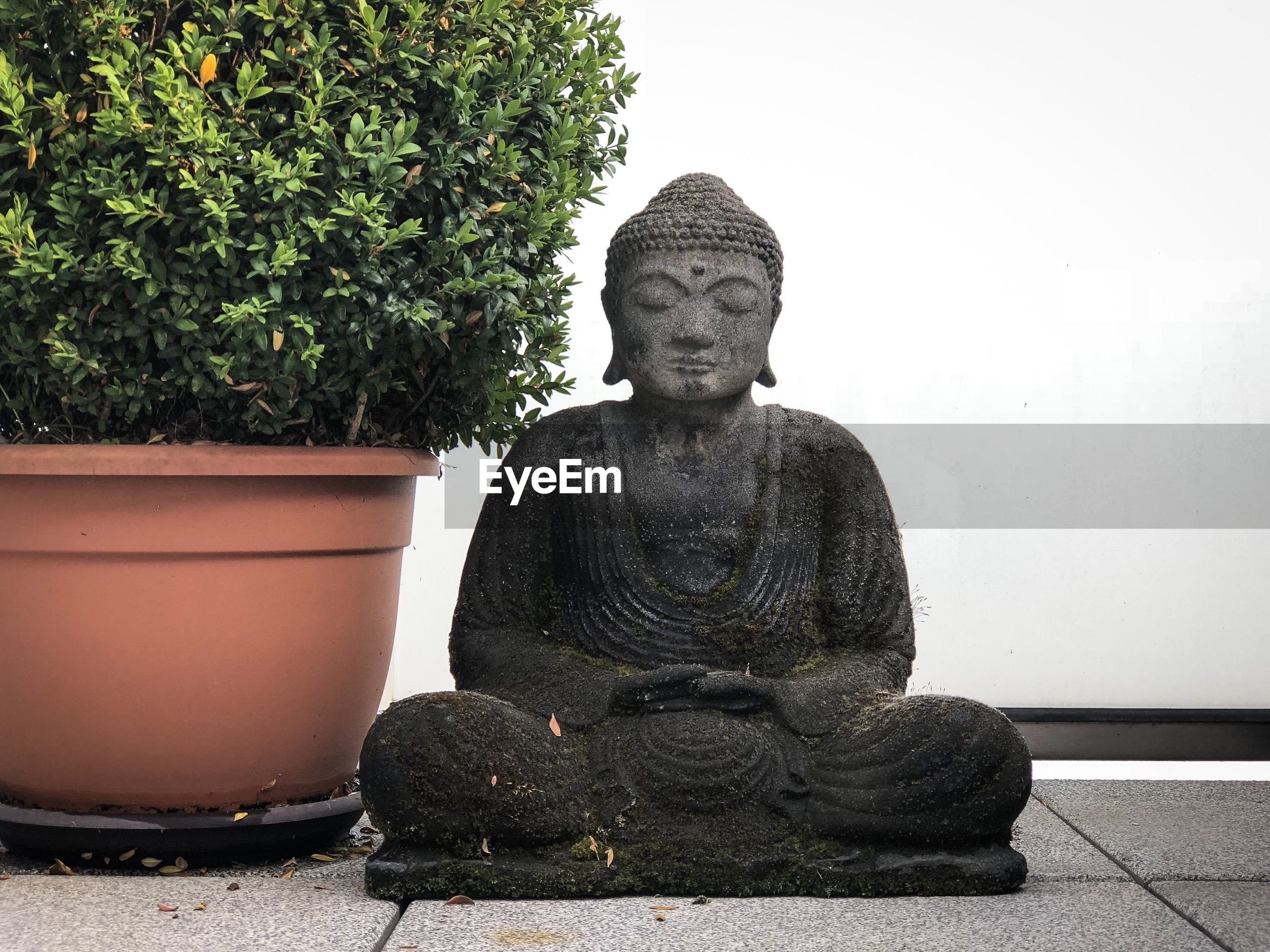 Statue of buddha against potted plants