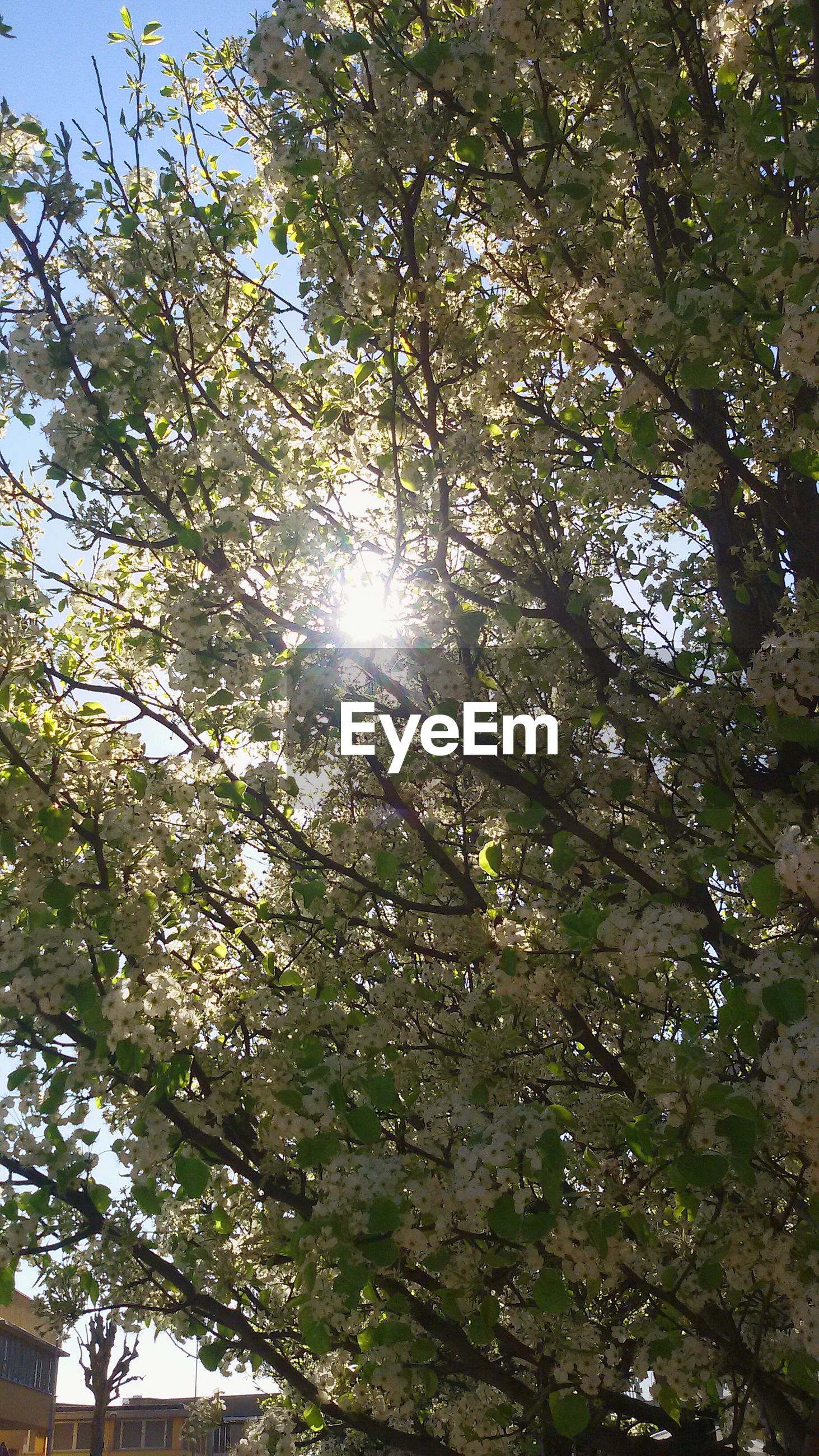 tree, sun, low angle view, sunlight, sunbeam, lens flare, branch, growth, nature, tranquility, sunny, beauty in nature, bright, sky, day, no people, green color, outdoors, streaming, back lit