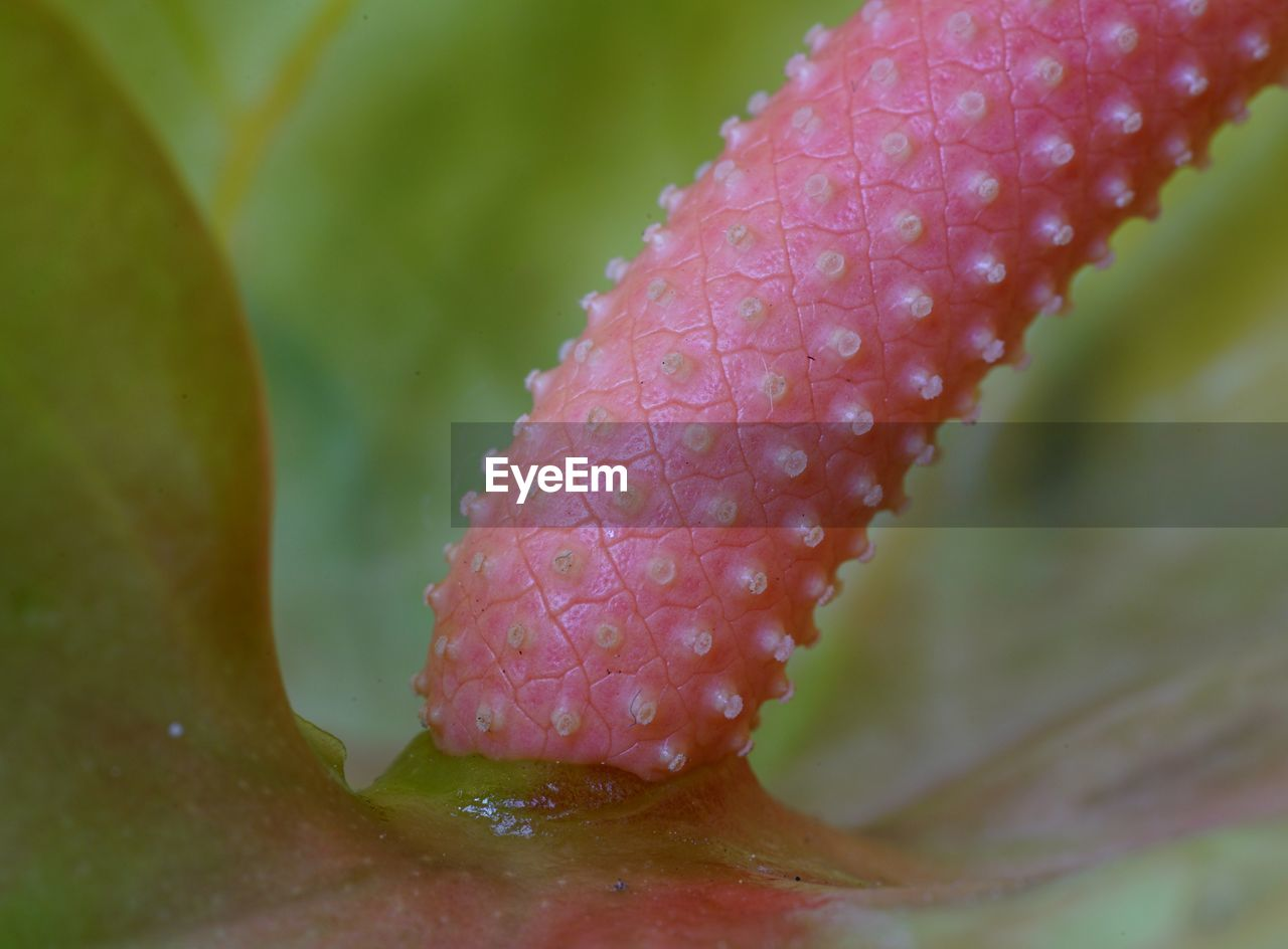 nature, growth, close-up, selective focus, no people, green color, day, beauty in nature, plant, wet, outdoors, leaf, fragility, animal themes, freshness, undersea