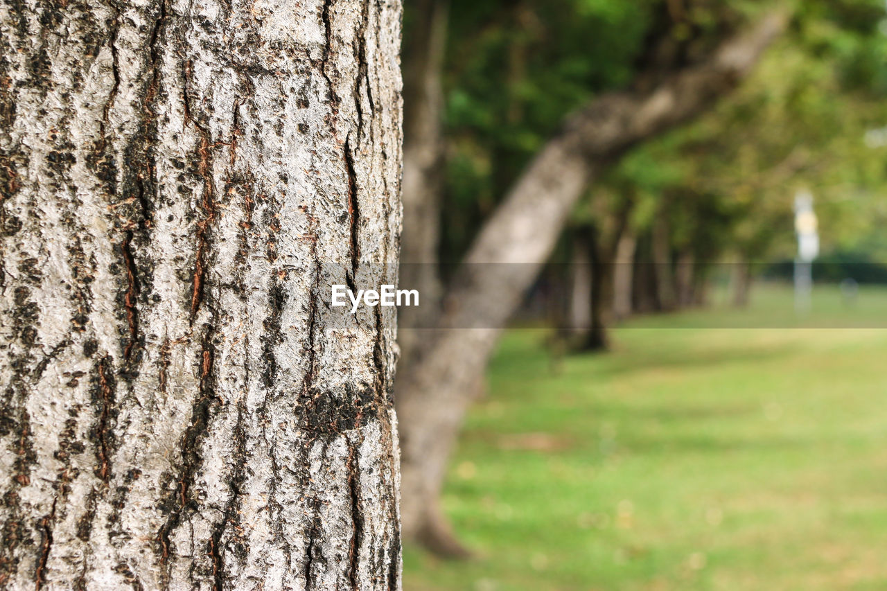 trunk, tree trunk, tree, plant, nature, land, textured, focus on foreground, no people, wood - material, outdoors, growth, rough, day, field, grass, forest, close-up, pattern, beauty in nature, bark