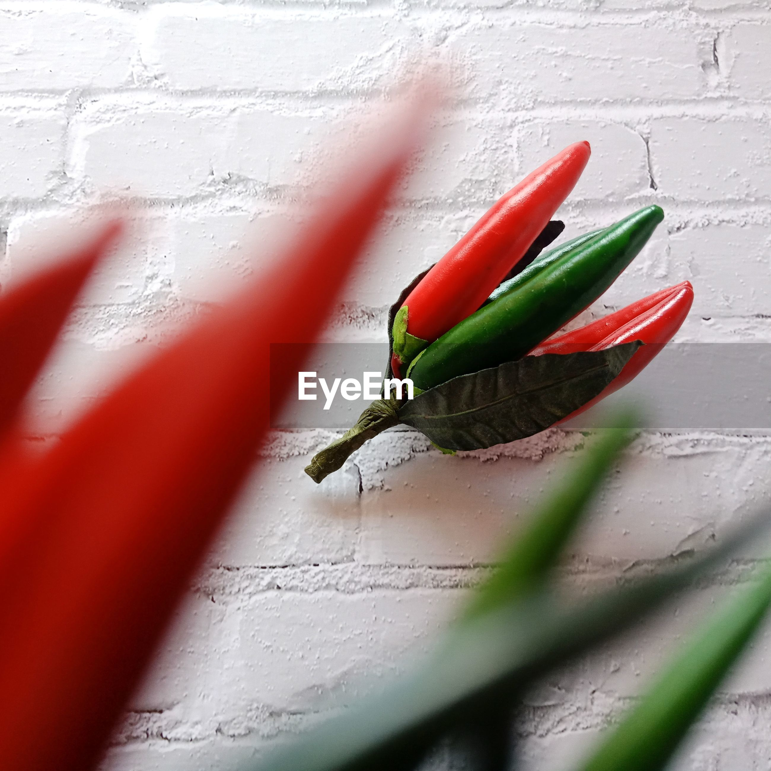CLOSE-UP OF RED ROSE ON WALL