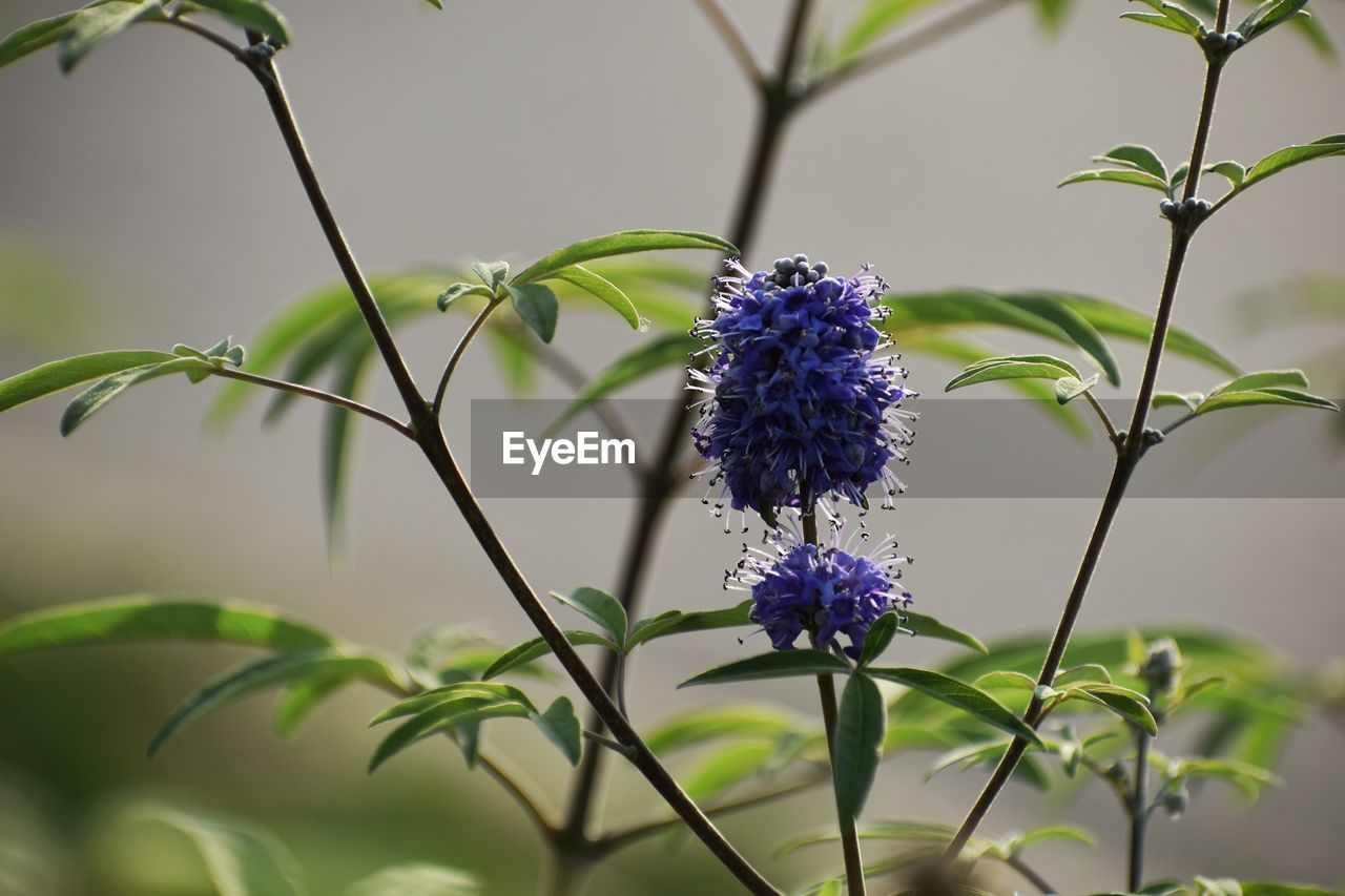 flowering plant, flower, plant, beauty in nature, fragility, freshness, vulnerability, growth, purple, petal, close-up, nature, flower head, focus on foreground, plant part, no people, leaf, plant stem, day, inflorescence, outdoors, pollination