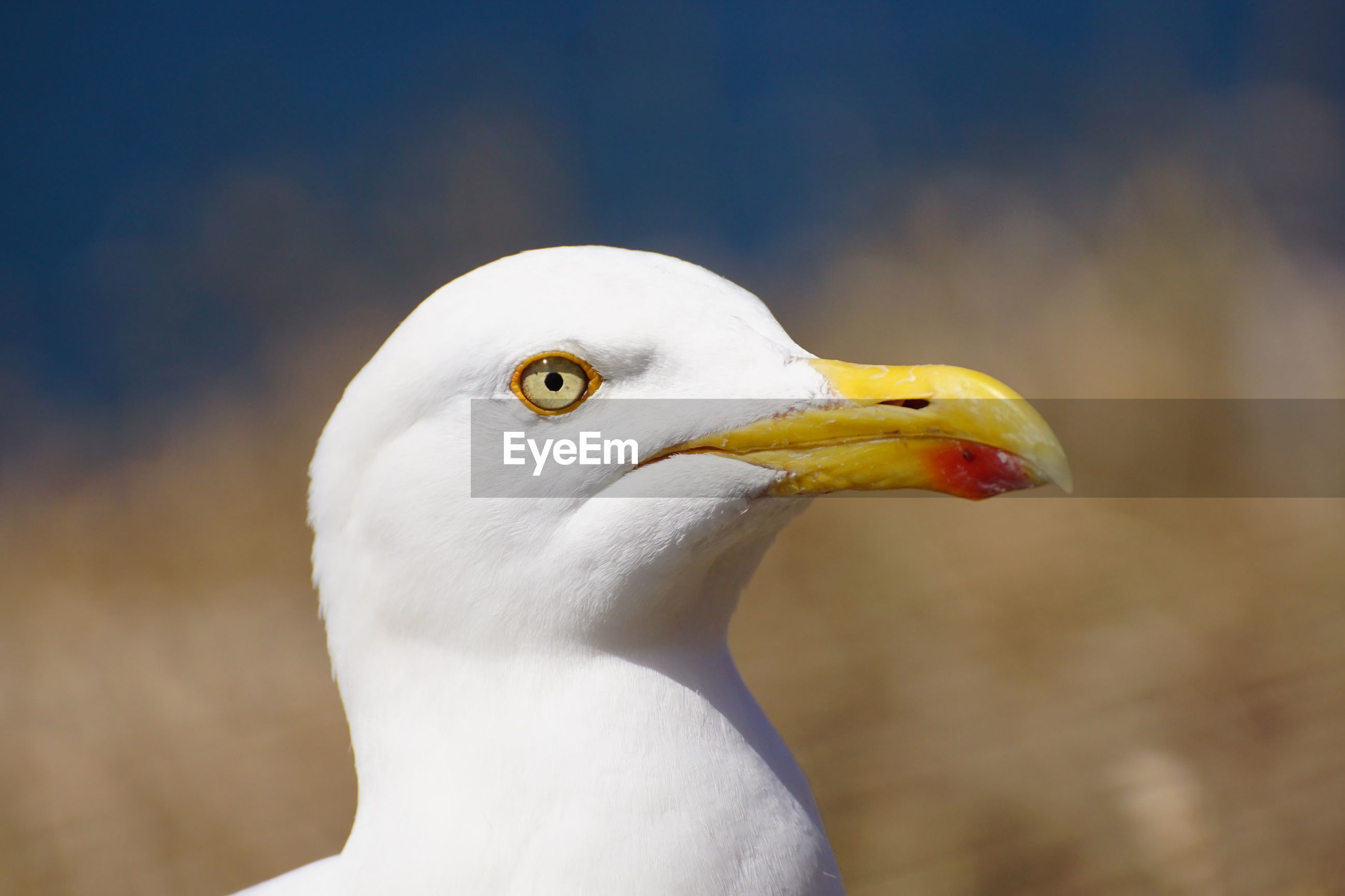 CLOSE-UP OF SEAGULL OUTDOORS