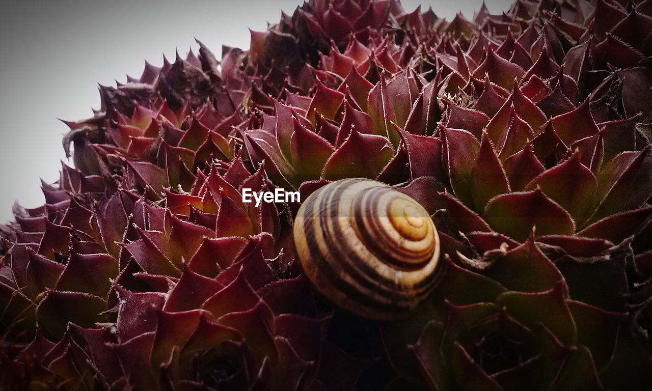 shell, close-up, animal, no people, invertebrate, beauty in nature, animal wildlife, animal shell, pattern, nature, animal themes, spiral, snail, gastropod, one animal, natural pattern, mollusk, animals in the wild, day, plant