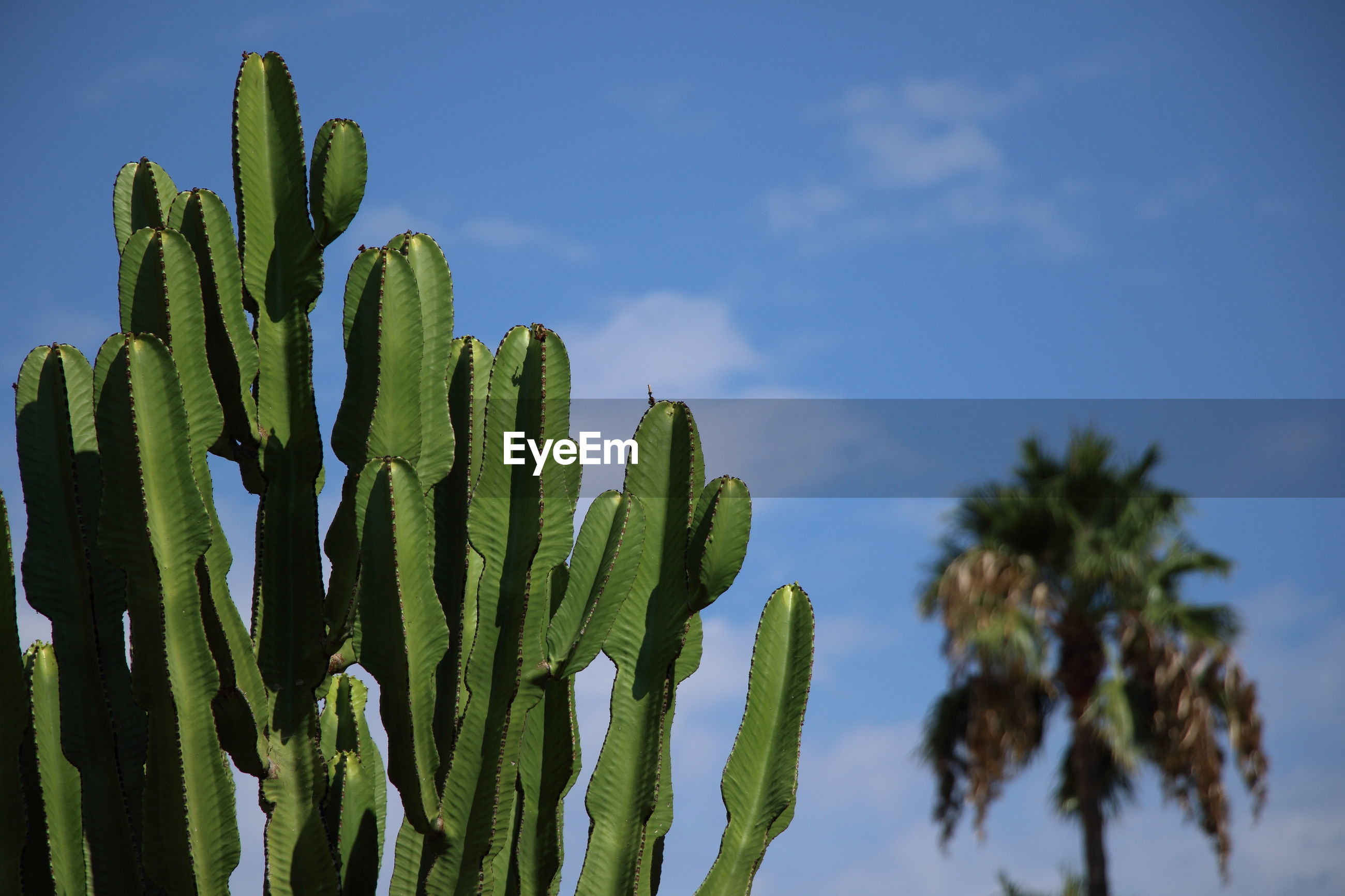 LOW ANGLE VIEW OF SUCCULENT PLANTS AGAINST SKY