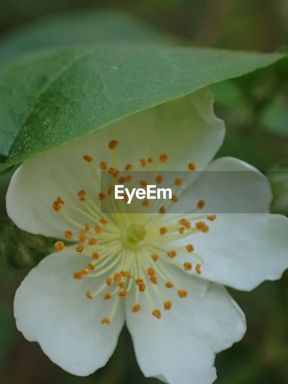 flower, petal, beauty in nature, flower head, fragility, freshness, nature, growth, close-up, blossom, no people, stamen, day, pollen, outdoors, plant, springtime, blooming