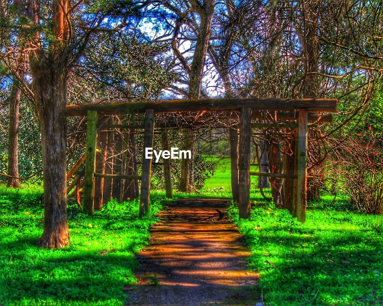 bridge - man made structure, connection, tree, the way forward, forest, nature, day, outdoors, grass, growth, tranquility, footbridge, no people, beauty in nature