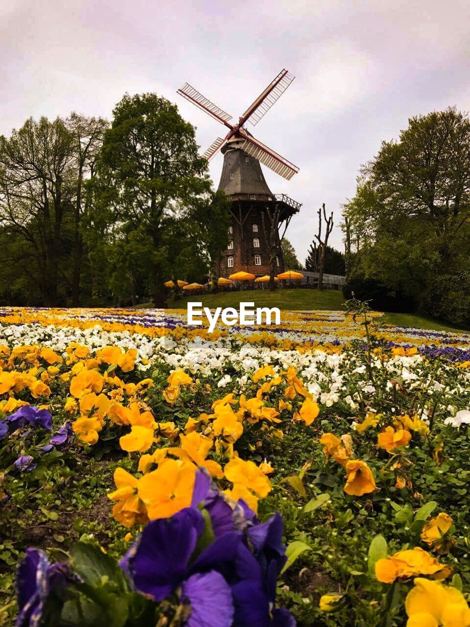 alternative energy, windmill, wind power, wind turbine, flower, fuel and power generation, renewable energy, environmental conservation, traditional windmill, nature, rural scene, field, beauty in nature, day, growth, yellow, outdoors, no people, tree, built structure, plant, sky, industrial windmill, architecture, freshness