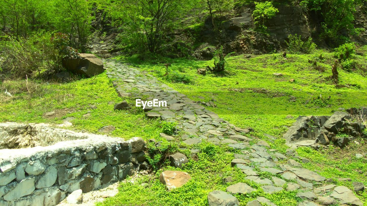 rock - object, nature, stream - flowing water, no people, outdoors, green color, tranquility, grass, day, moss, scenics, water, forest, landscape, tree, plant, beauty in nature, animal themes