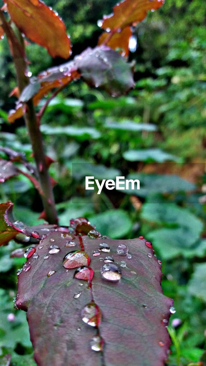 plant, growth, close-up, plant part, beauty in nature, leaf, nature, day, drop, focus on foreground, tree, no people, water, wet, autumn, outdoors, change, selective focus, leaves, rain, raindrop, dew, purity