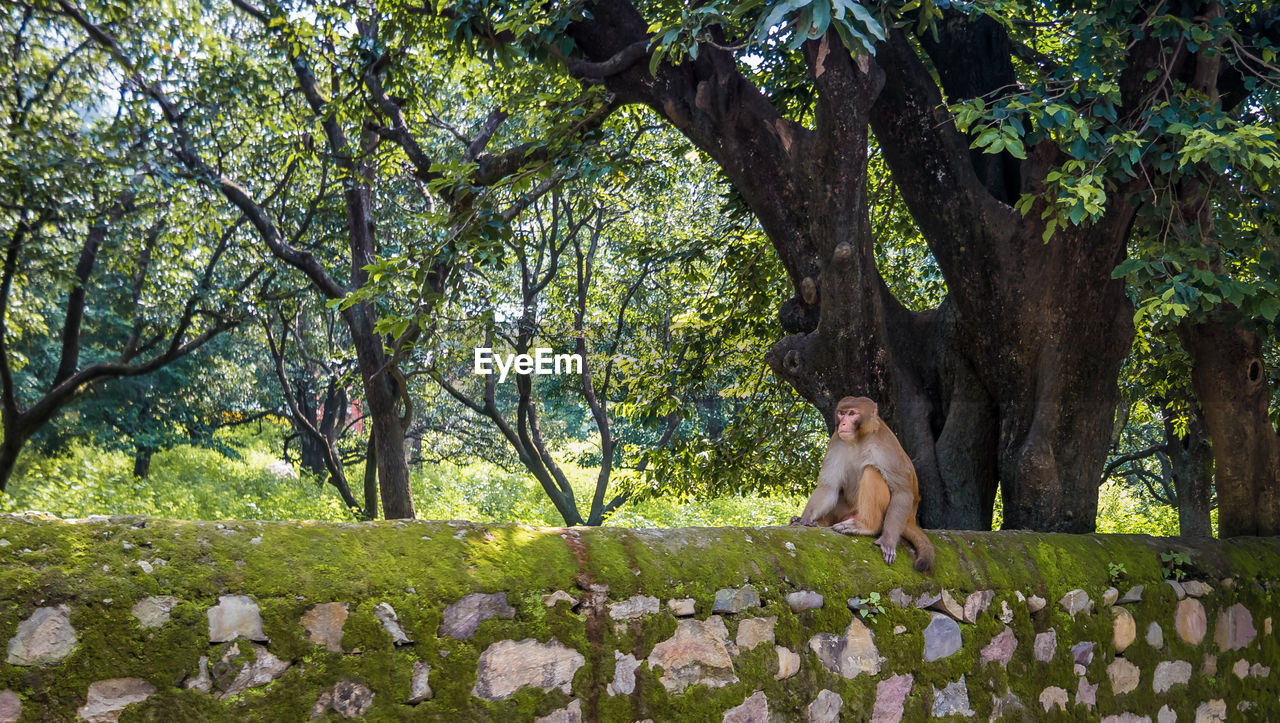 tree, plant, mammal, one animal, full length, nature, day, tree trunk, pets, trunk, sitting, domestic, domestic animals, branch, people, portrait, outdoors