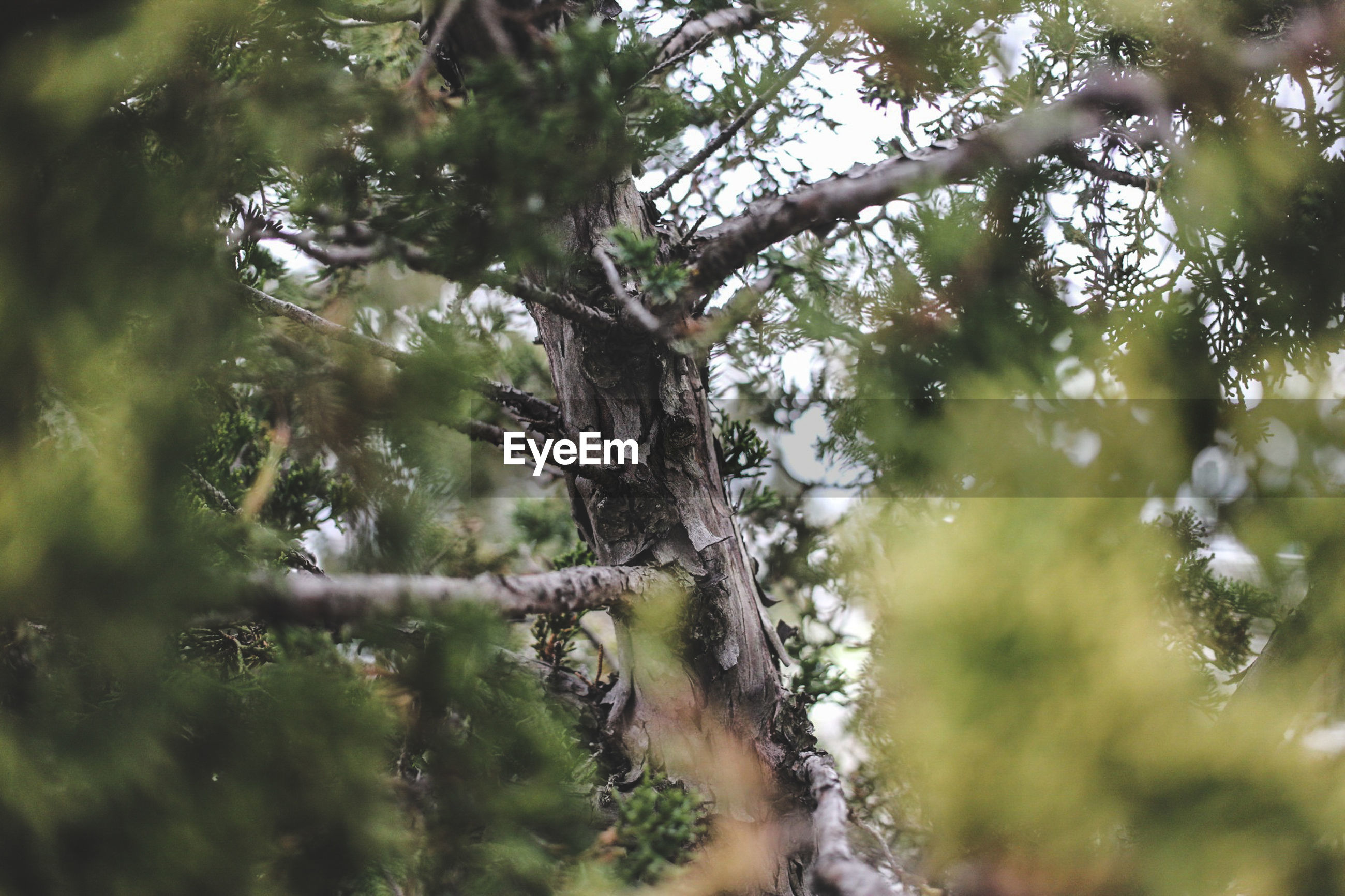 LOW ANGLE VIEW OF TREE BRANCH IN FOREST