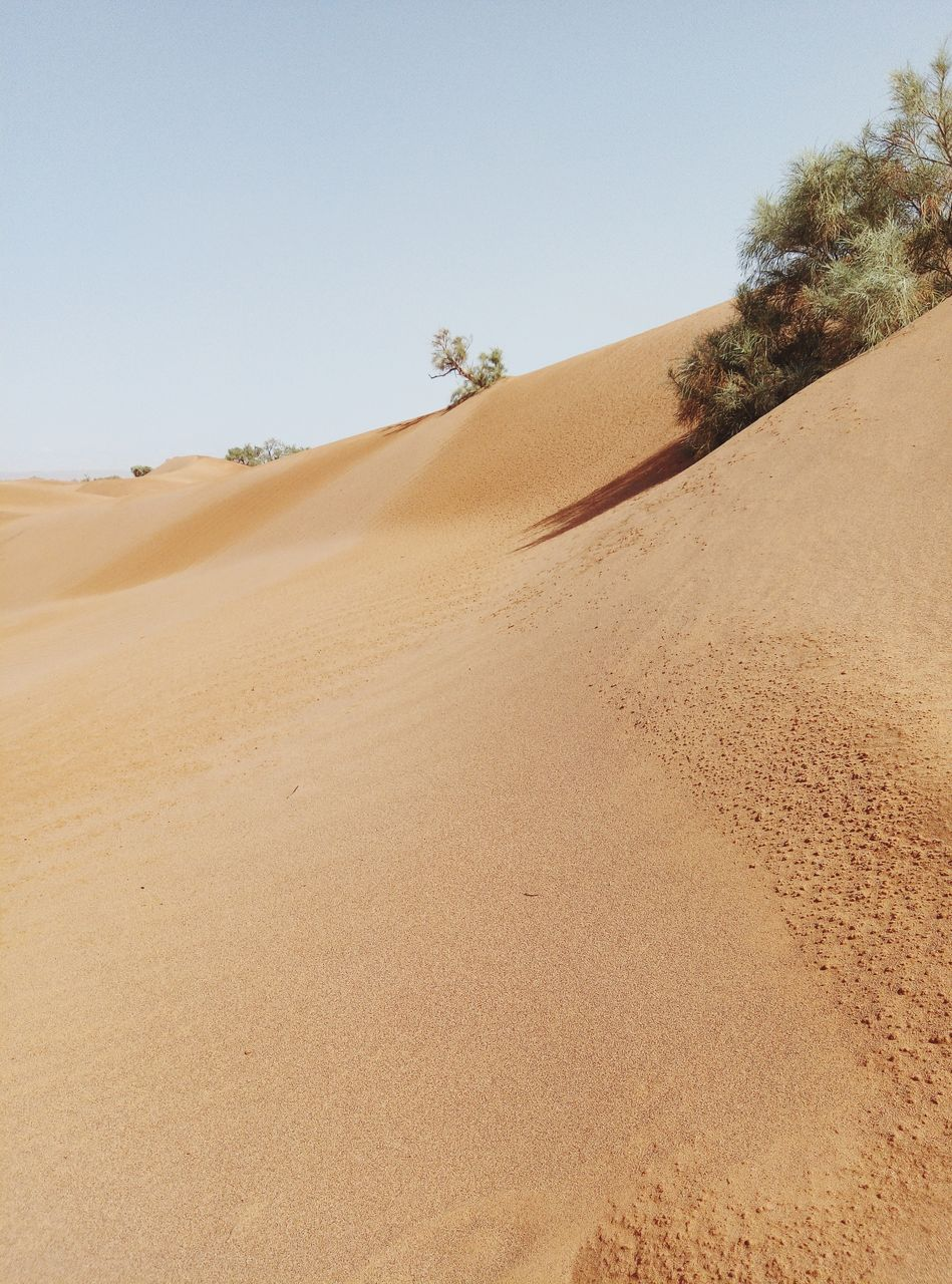 sand, land, desert, sky, sand dune, landscape, scenics - nature, tranquility, arid climate, climate, tranquil scene, environment, clear sky, nature, beauty in nature, day, non-urban scene, remote, tree, plant, no people, outdoors