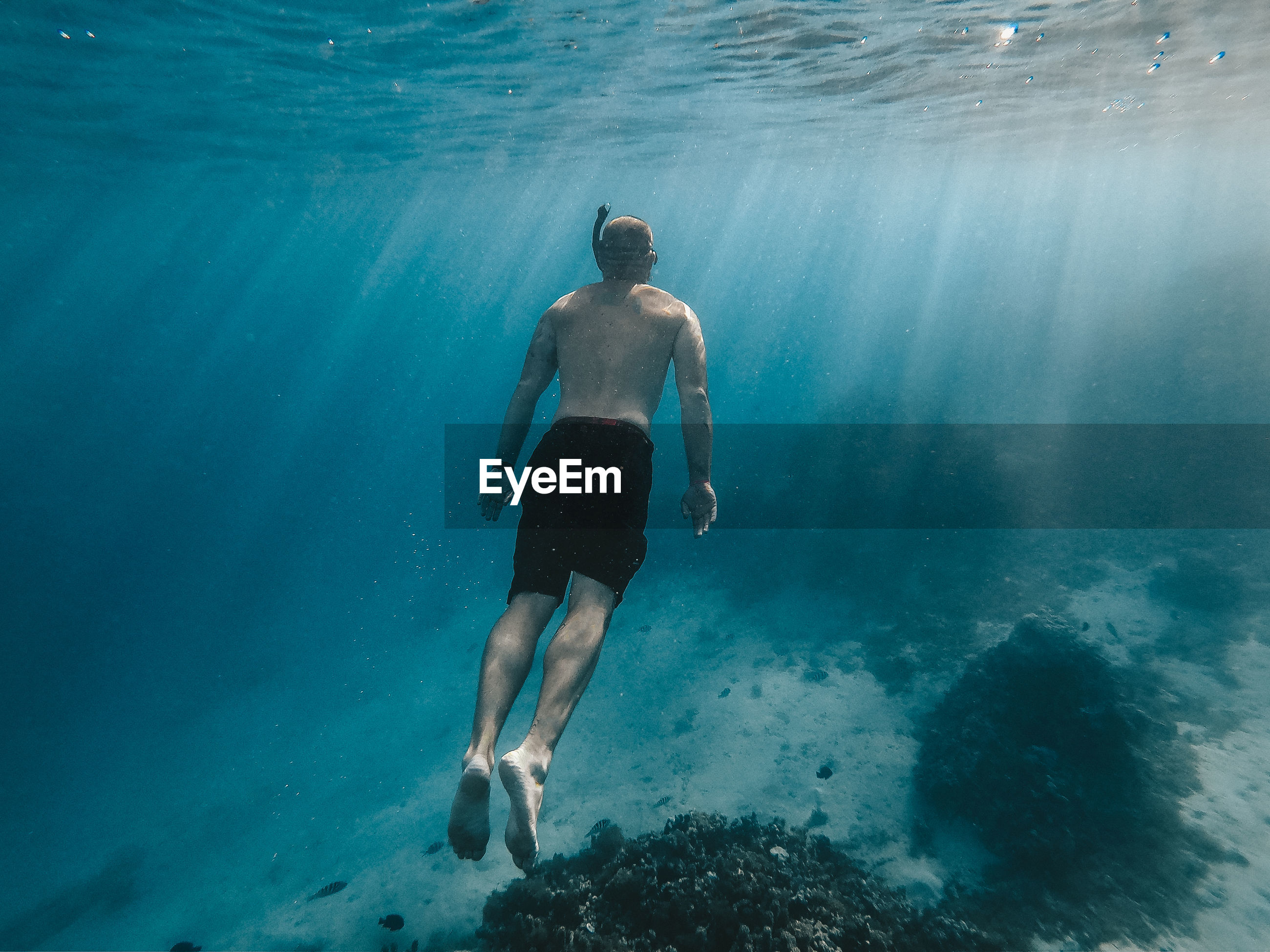 Rear view full length of shirtless man swimming in sea