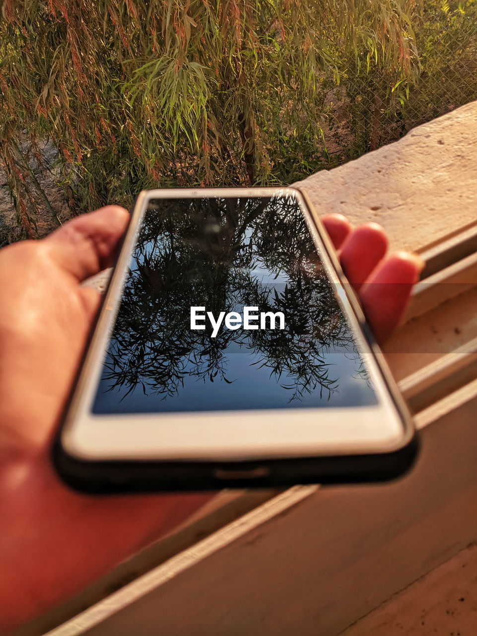 technology, wireless technology, plant, tree, one person, screen, human body part, nature, reflection, communication, device screen, human hand, day, outdoors, smart phone, portable information device, connection, hand, digital tablet, leisure activity, finger