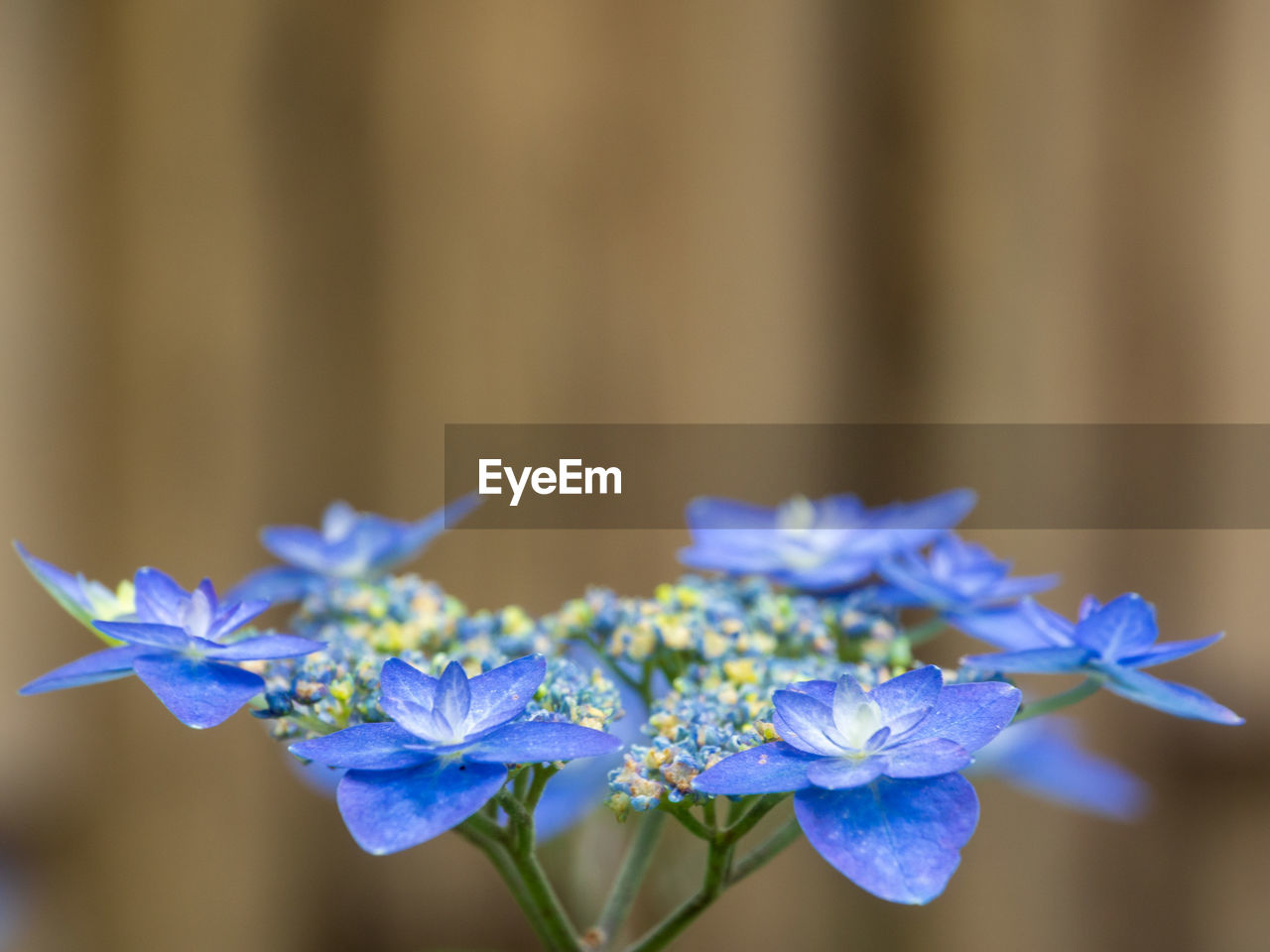 flowering plant, flower, plant, vulnerability, beauty in nature, fragility, close-up, freshness, focus on foreground, growth, no people, petal, nature, blue, inflorescence, flower head, day, selective focus, purple, outdoors