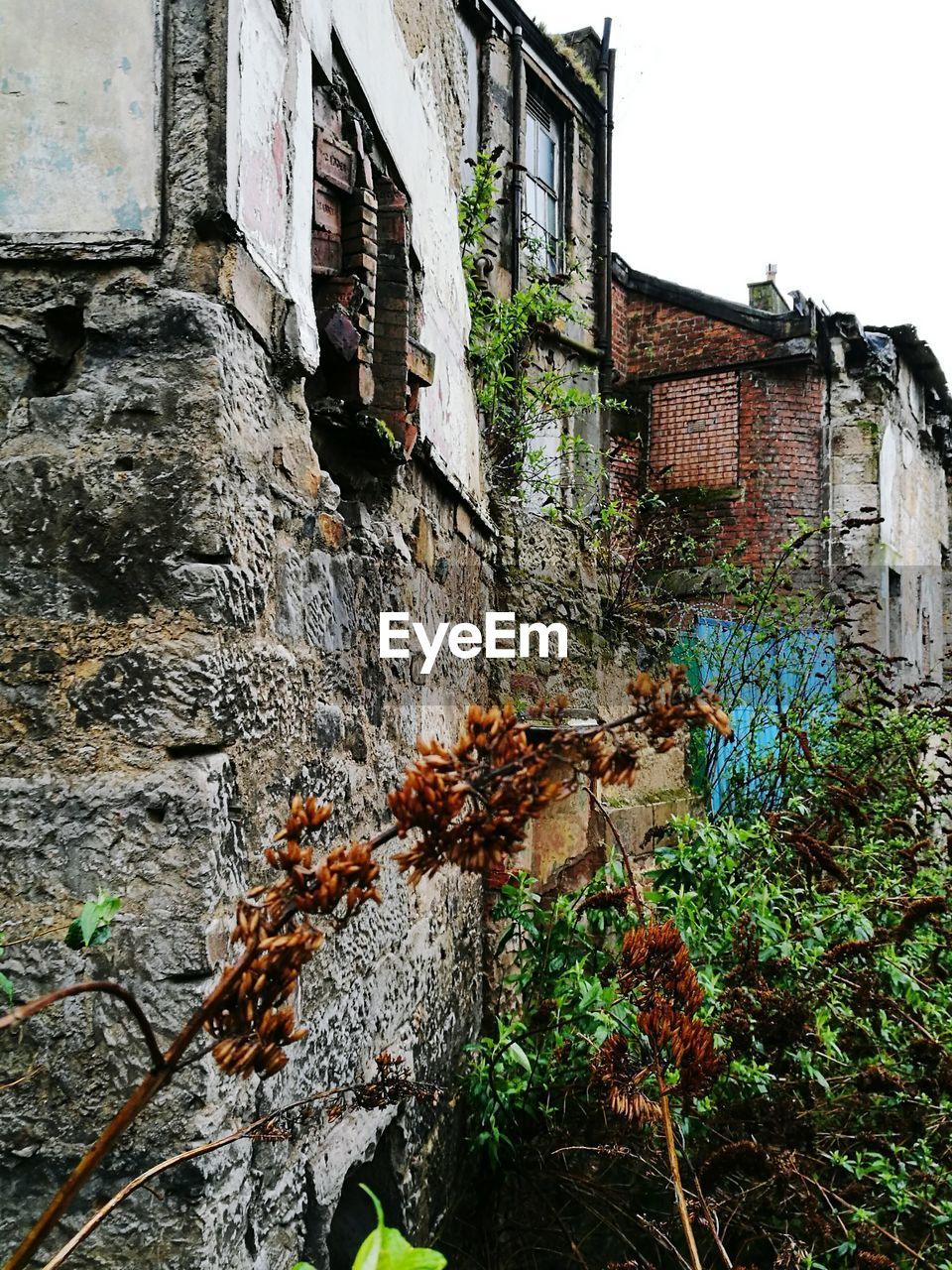 architecture, building exterior, built structure, weathered, plant, outdoors, ivy, damaged, window, day, no people, leaf, nature