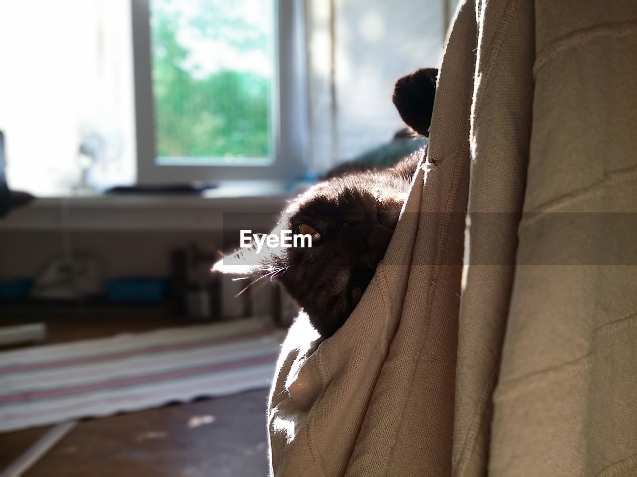 one animal, pets, domestic animals, domestic, mammal, indoors, home interior, vertebrate, window, focus on foreground, cat, feline, one person, lifestyles, domestic cat, day, portrait, whisker, pet owner