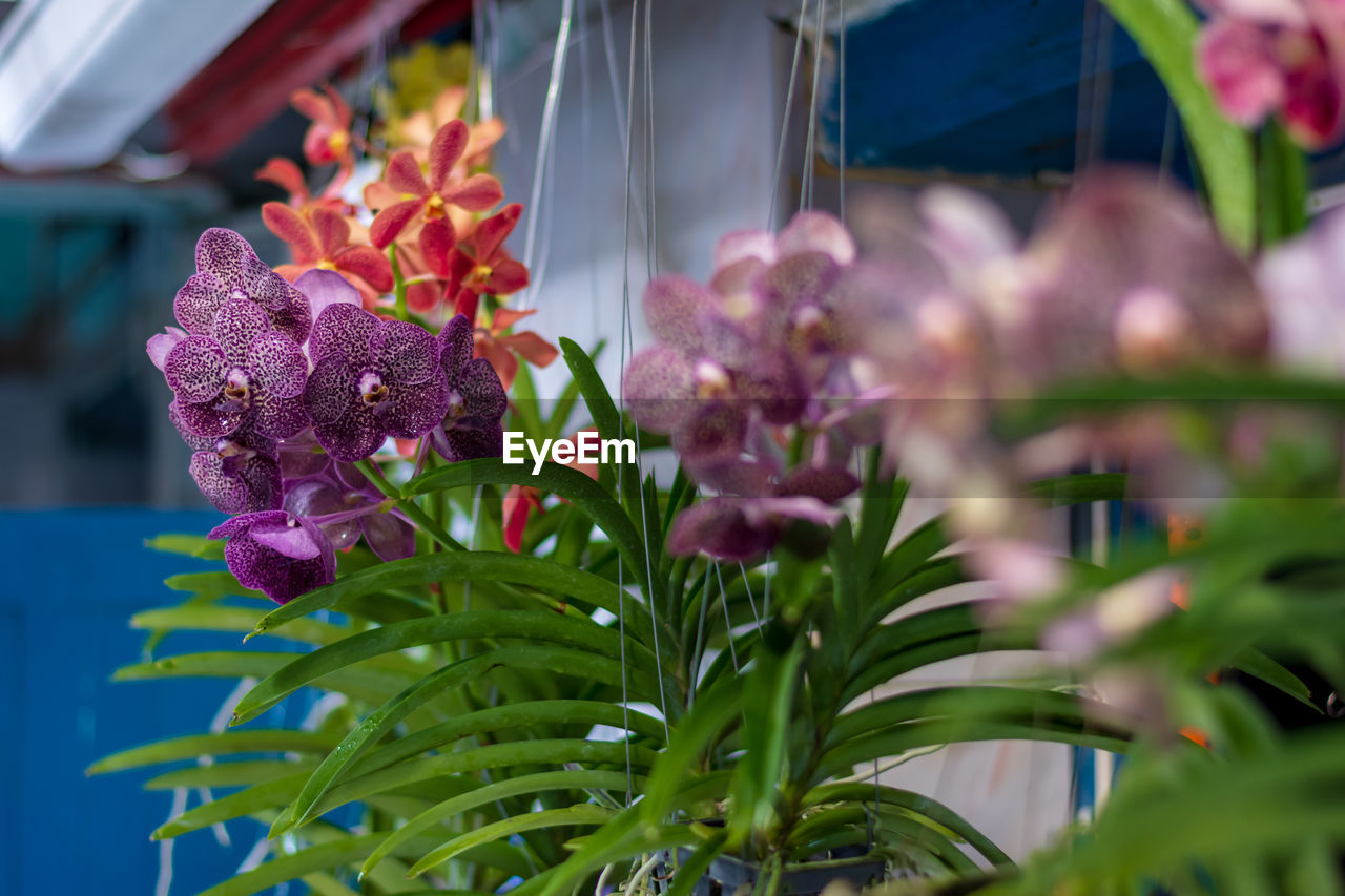 flower, flowering plant, plant, freshness, growth, beauty in nature, vulnerability, fragility, close-up, plant part, leaf, selective focus, nature, petal, pink color, no people, purple, day, flower head, inflorescence, bunch of flowers, lilac