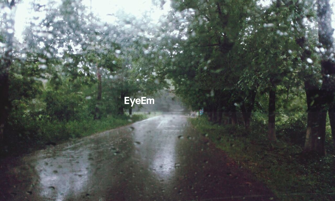 tree, nature, road, forest, wet, the way forward, no people, day, water, outdoors
