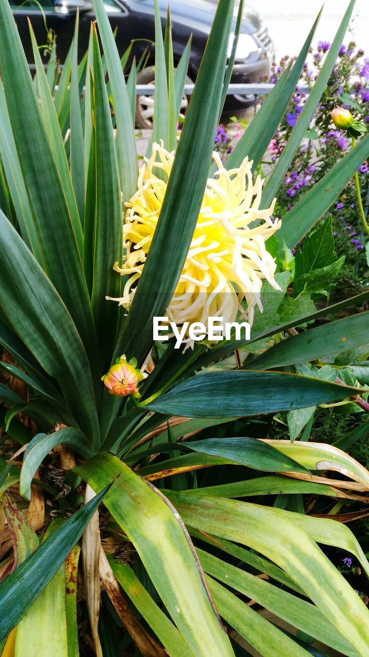 growth, flower, nature, beauty in nature, leaf, plant, freshness, fragility, no people, green color, yellow, outdoors, day, close-up, blooming, flower head