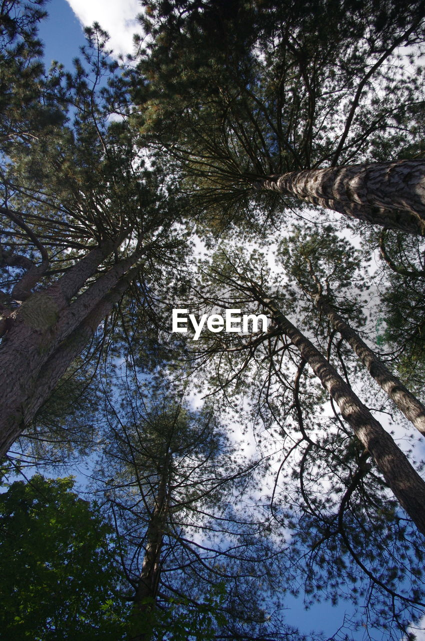 tree, low angle view, branch, nature, growth, beauty in nature, day, tree trunk, outdoors, tranquility, no people, scenics, sky, forest