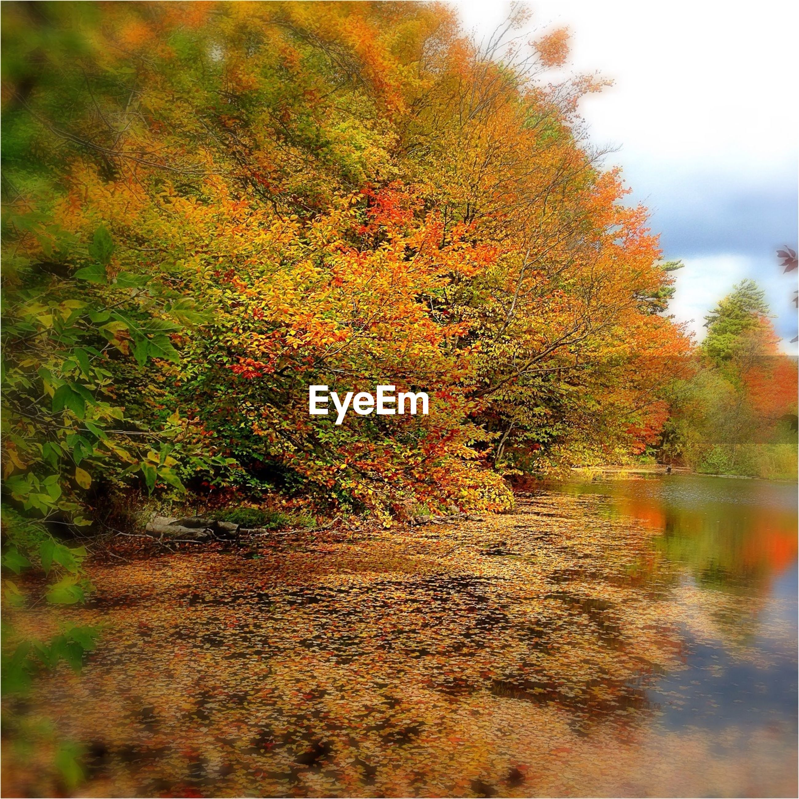 tree, autumn, change, growth, nature, season, tranquility, beauty in nature, tranquil scene, scenics, orange color, leaf, branch, water, plant, selective focus, day, outdoors, idyllic, no people