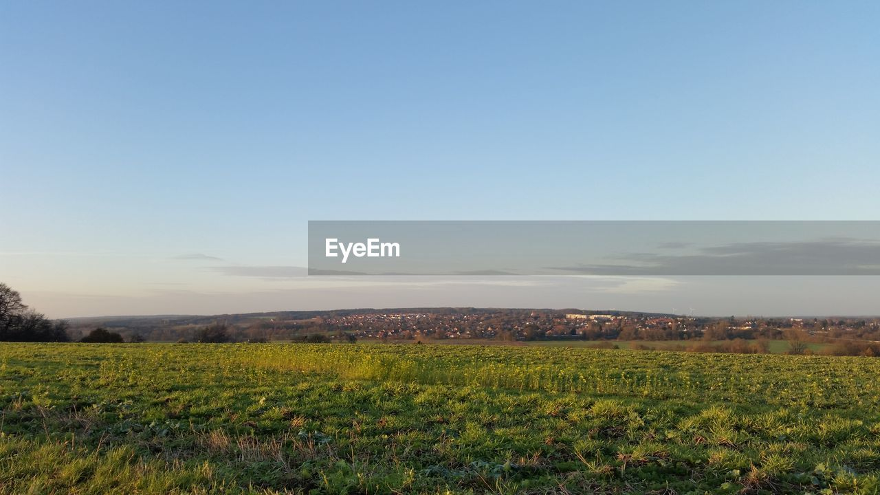 agriculture, field, landscape, farm, nature, tranquil scene, scenics, beauty in nature, rural scene, growth, crop, tranquility, cultivated land, no people, green color, outdoors, sky, day, plant, clear sky, grass, tree